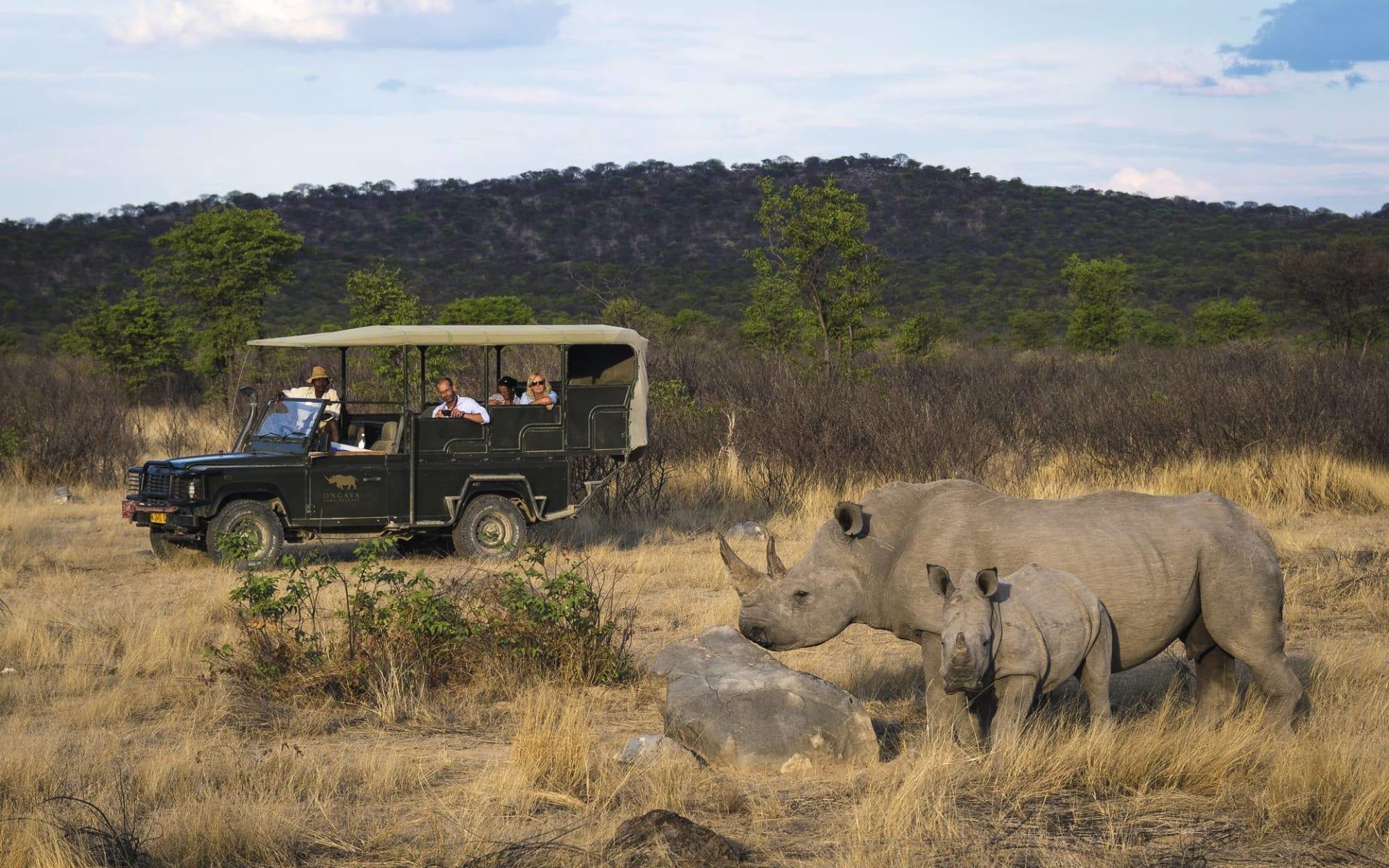 Ongava Lodge in Etosha Nationalpark:  Safarifahrzeug und Nashörner