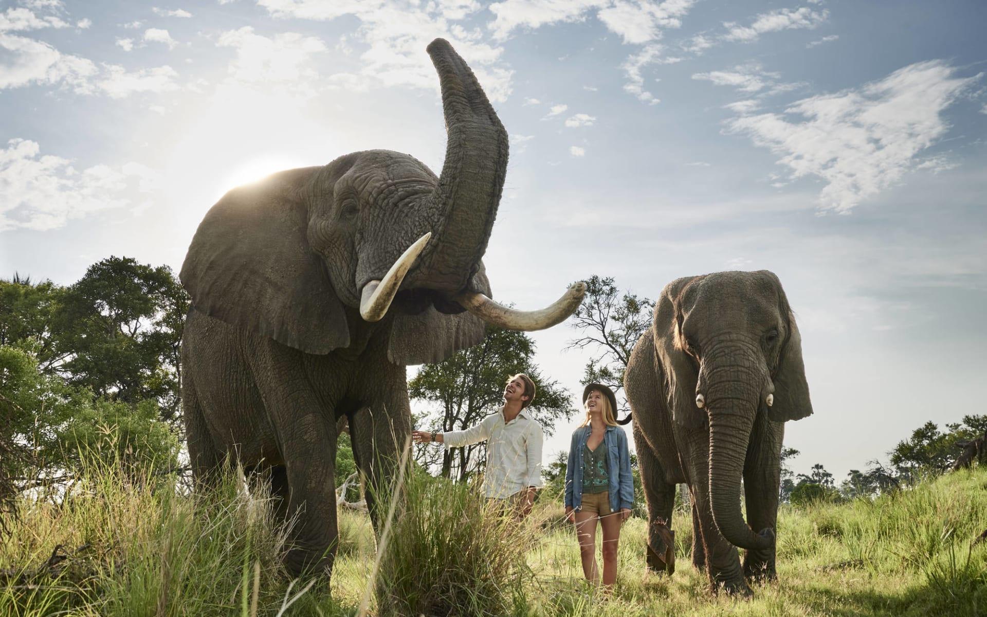 Sanctuary Baines' Camp in Okavango Delta:  SR002292