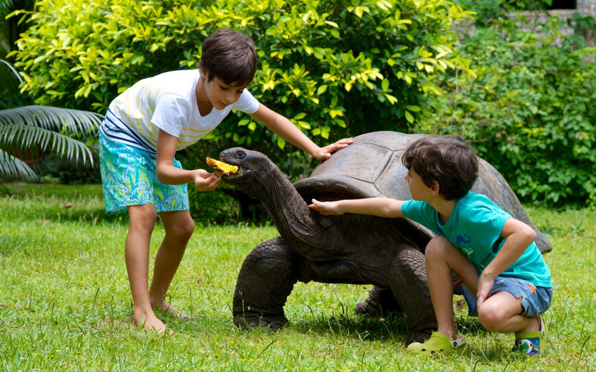 Les Villas d'Or in Praslin:  Turtle feeding