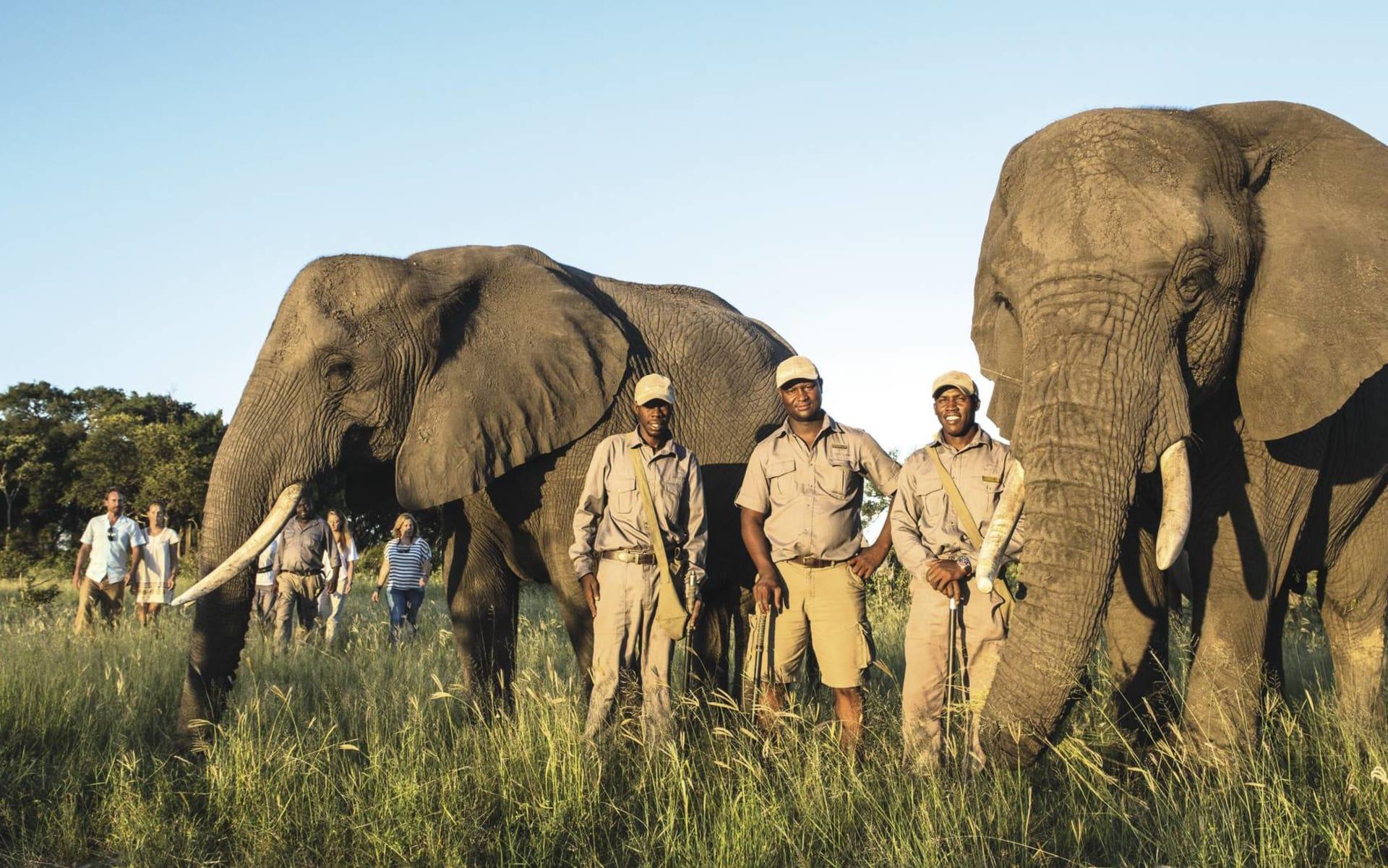 Abu Camp in Okavango Delta: Aktiv Abou Camp Elefanten und Menschen