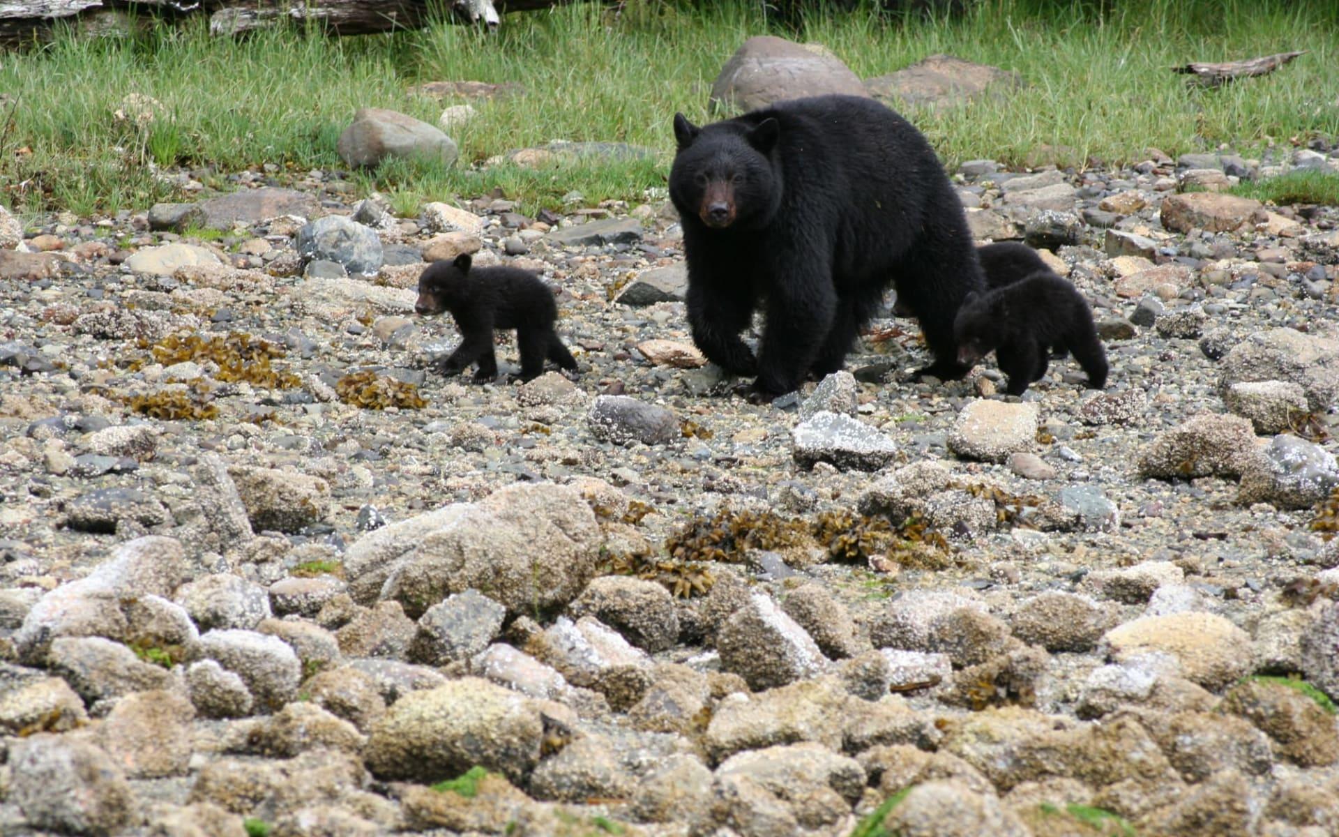 Clayoquot Wilderness Resort in Tofino: aktiv_ClayoquotWildernessResort_BearWatching
