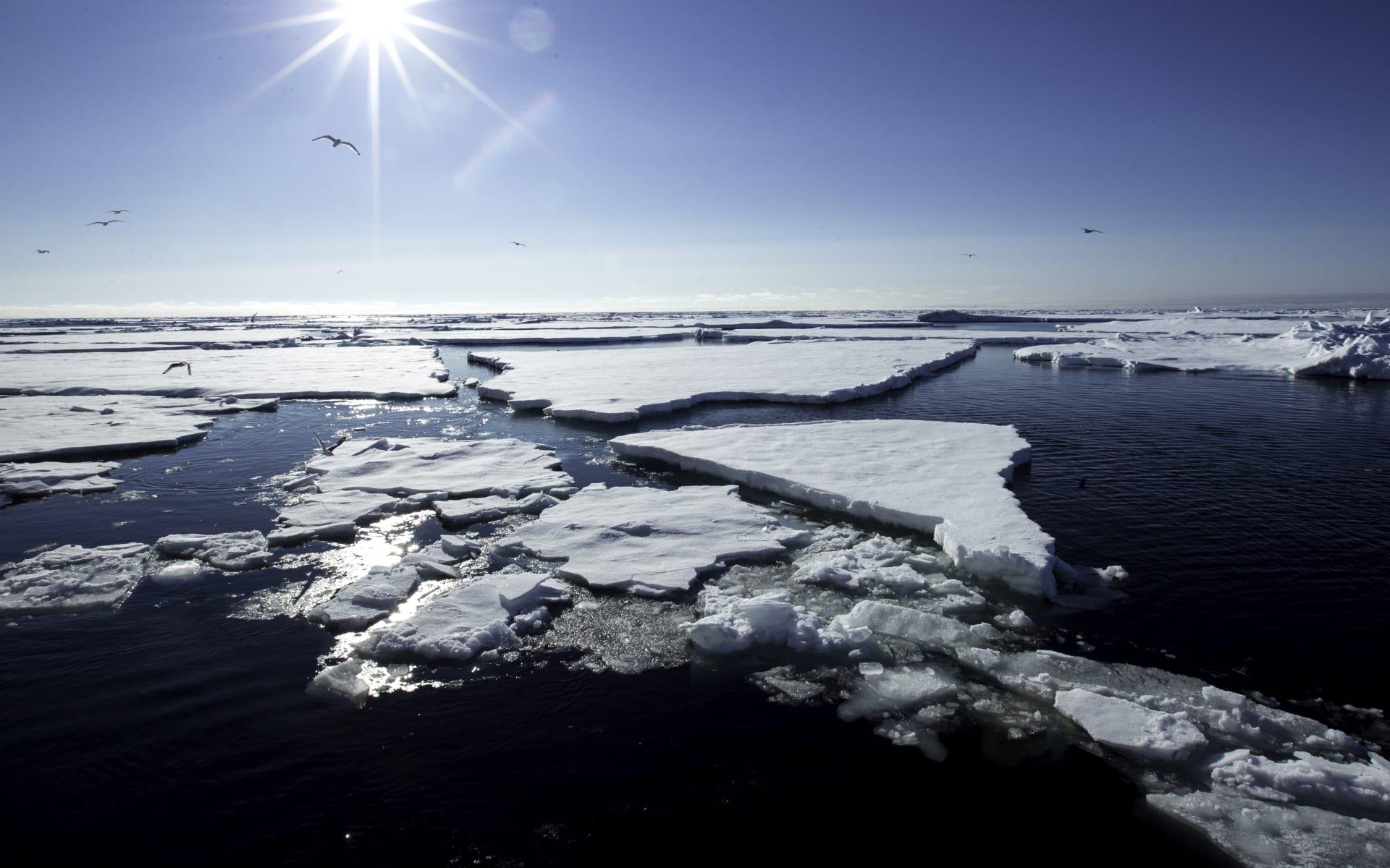 Jungfernreise in die Arktis ab Longyearbyen: Arctic pack ice