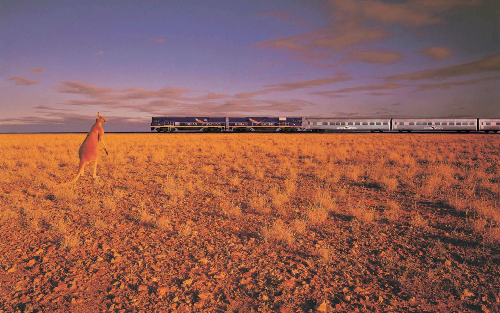 Indian Pacific von Perth nach Sydney: Australien - Bahnreisen - Indian Pacific mit Känguruh