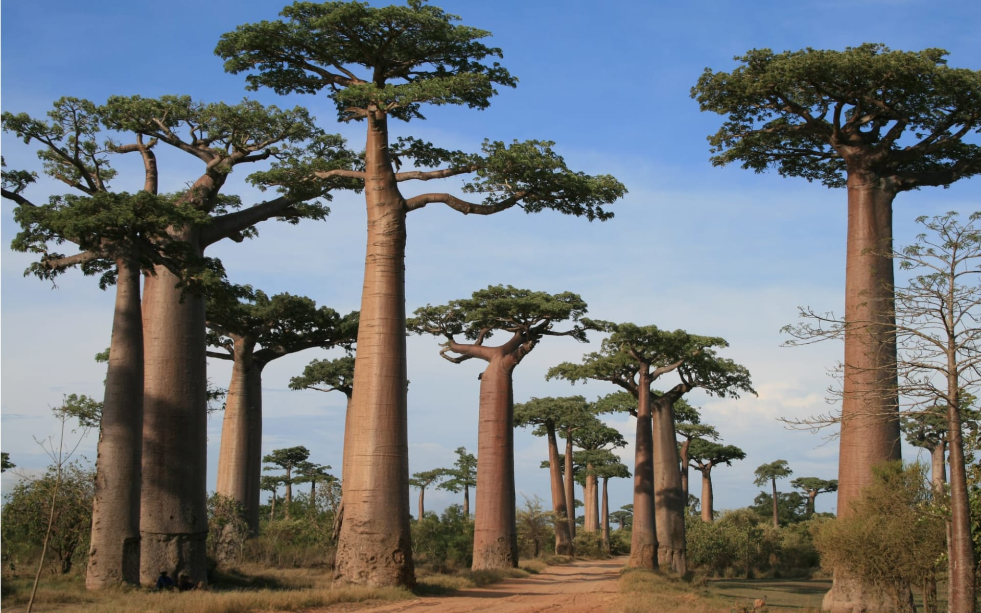 Einzigartiges Madagaskar ab Antananarivo: Baobab trees