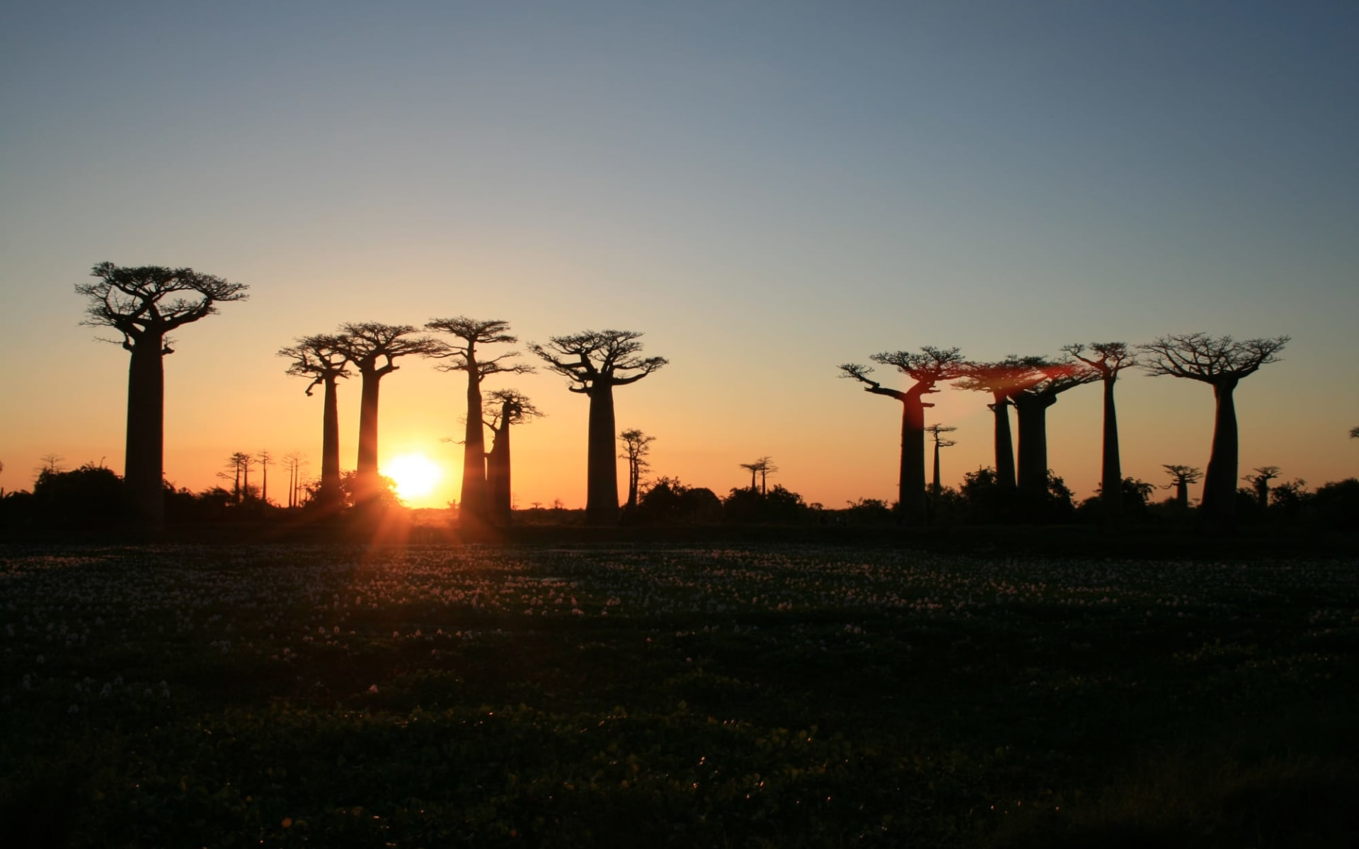 Morondava-Die Baobab Allee ab Antananarivo: Baobabs