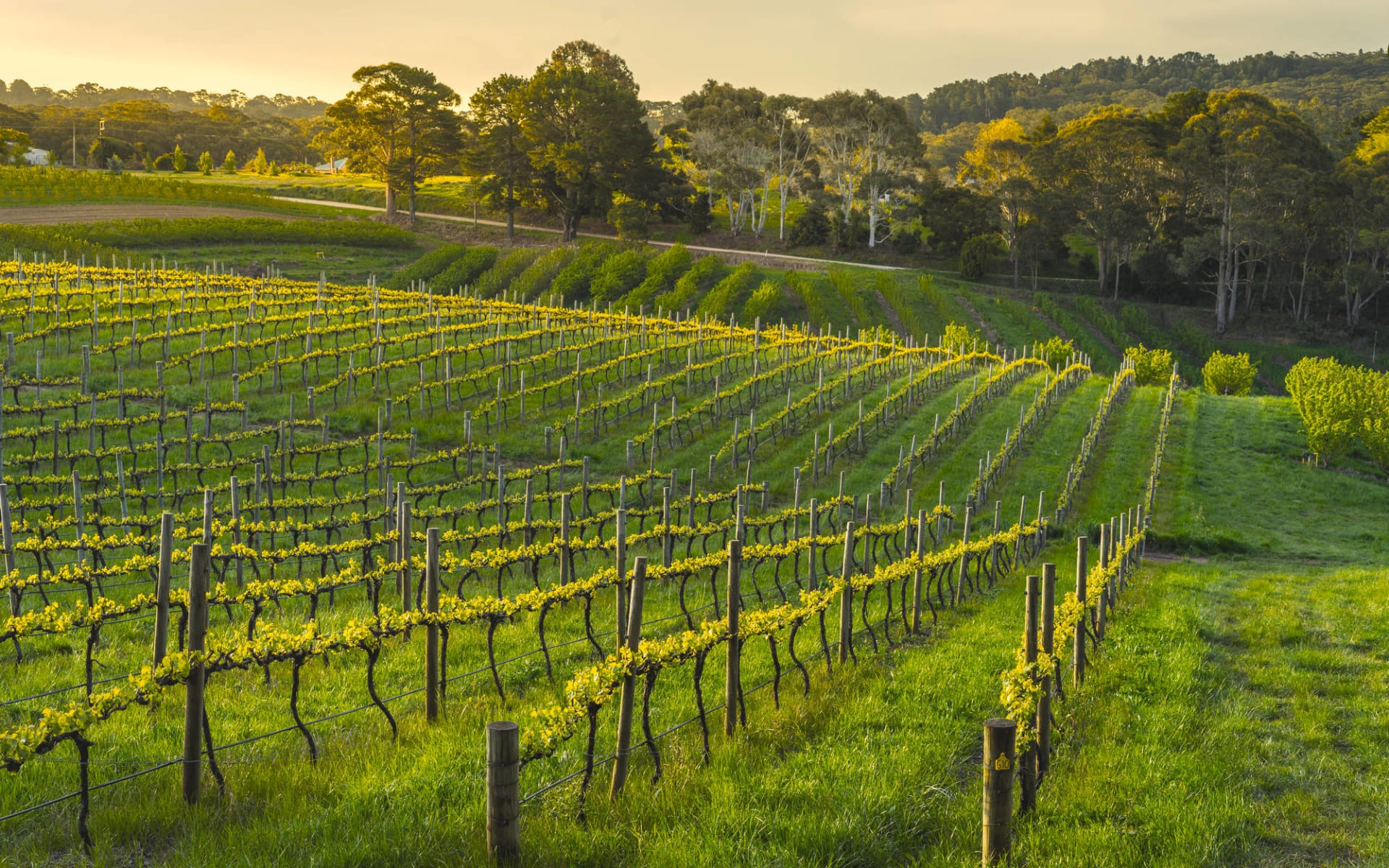 Magic Beauty ab Melbourne: Barossa Valley