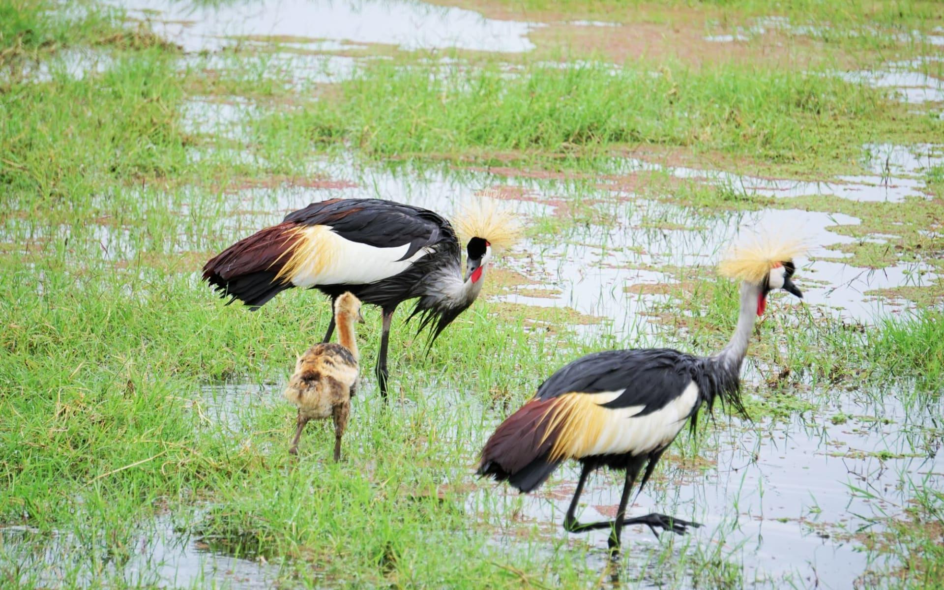 Best of Tanzania Safari ab Arusha: Bird