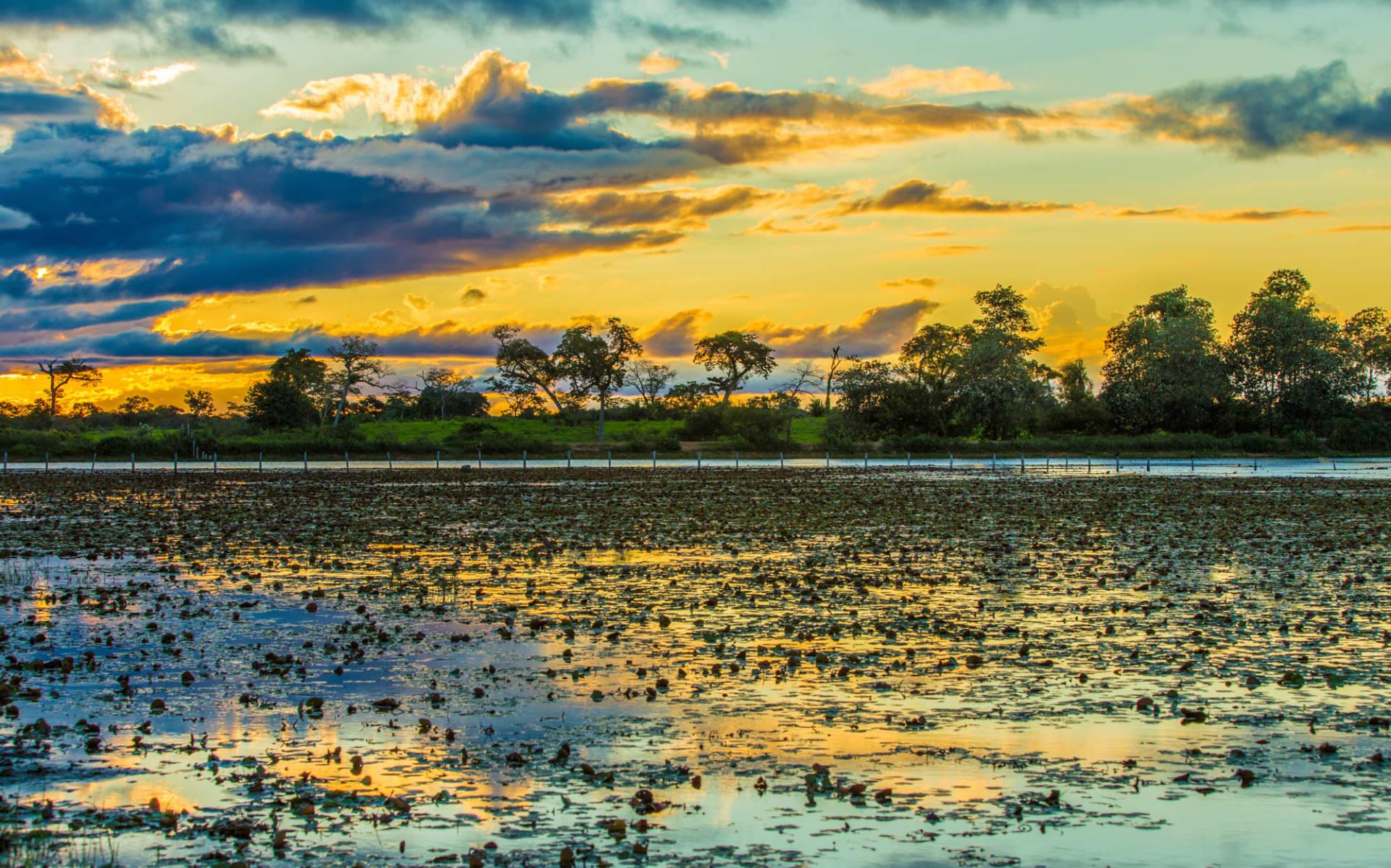 Pousada UeSo Estância Vitória 4 Tage ab Cuiabá: Pantanal
