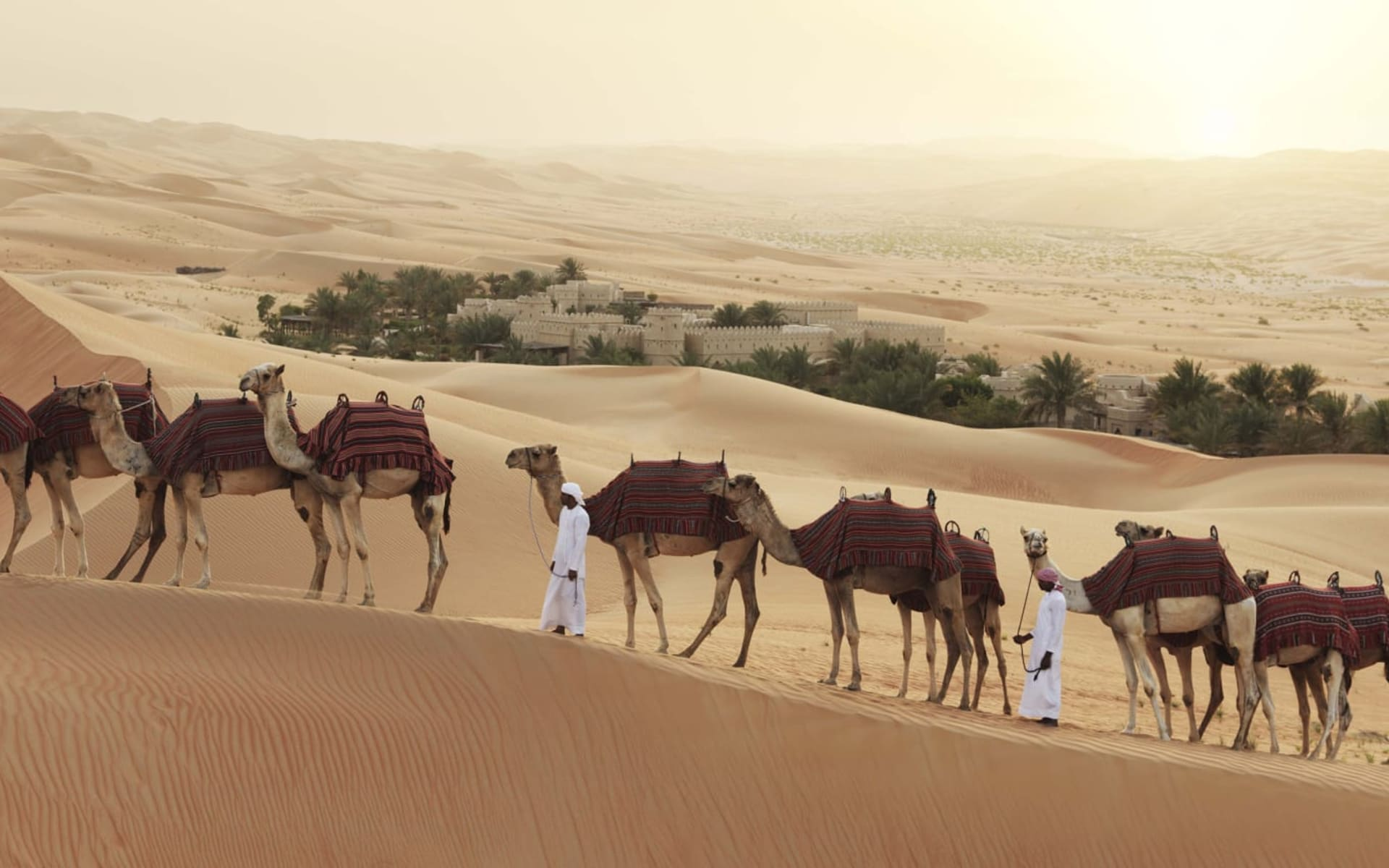 Anantara Qasr Al Sarab Desert Resort in Liwa: Camel