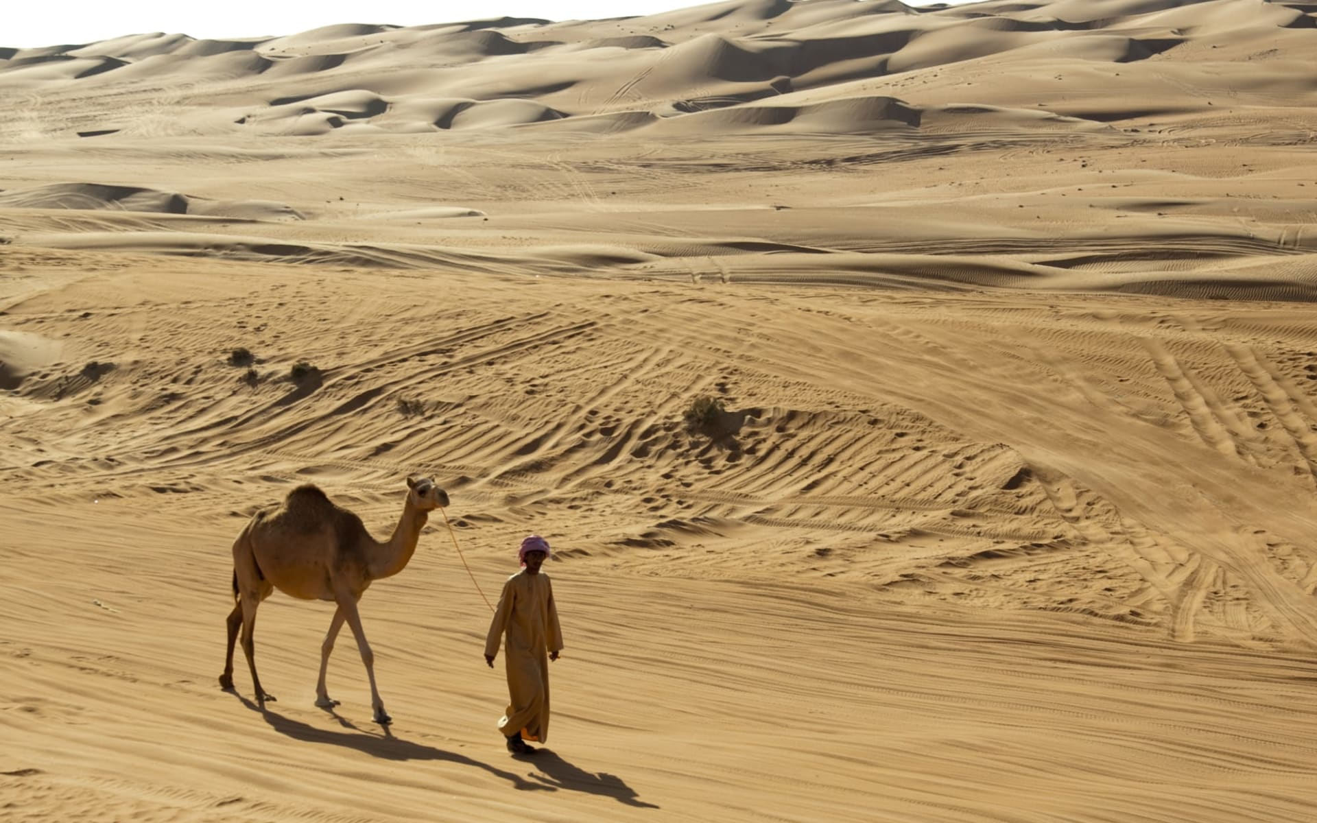 Oman Offroad-Abenteuer ab Muscat: Camel in the desert