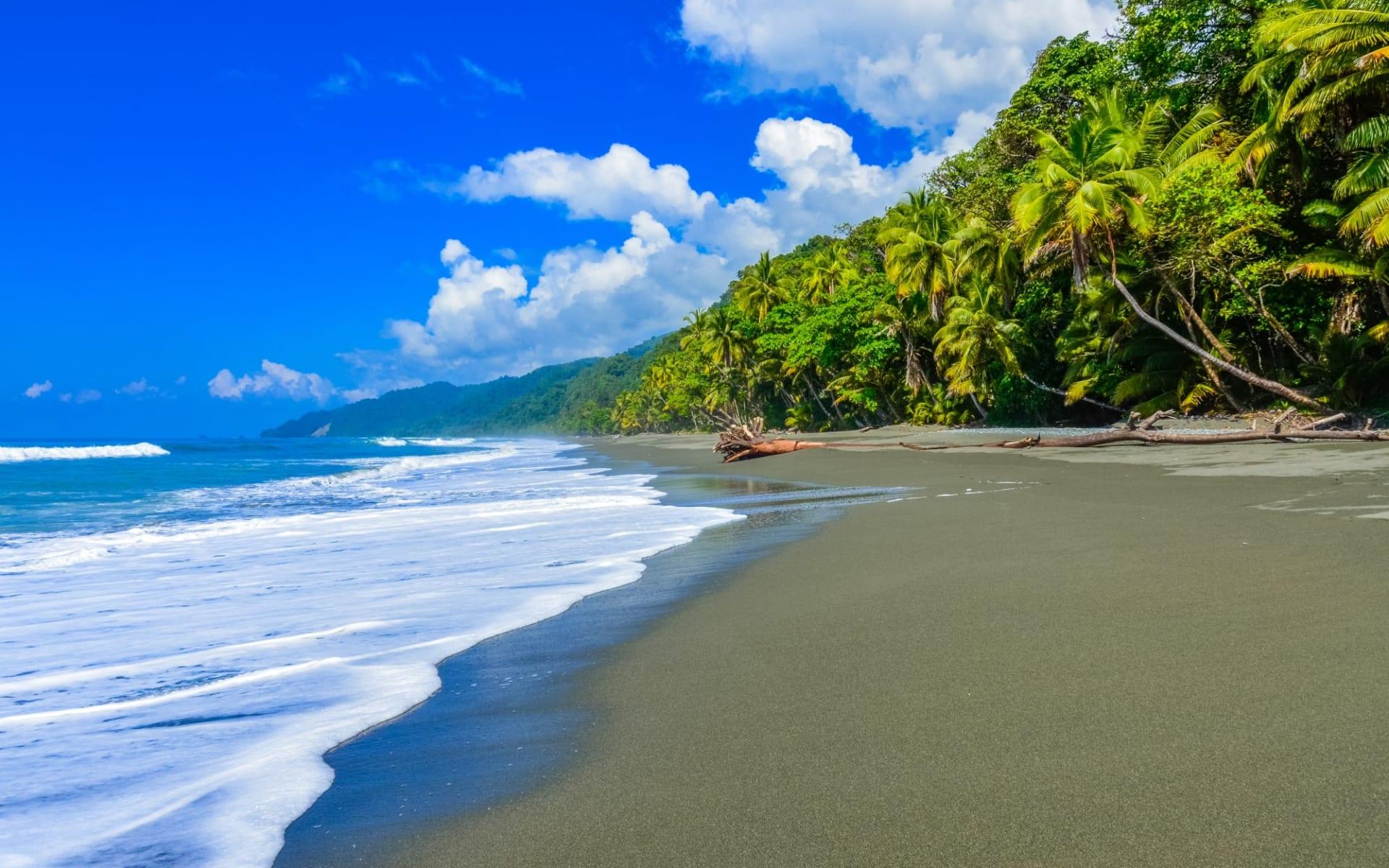 Aguila de Osa Inn ab Osa Peninsula: Costa Rica - Corcovado National Park - dunkler Strand