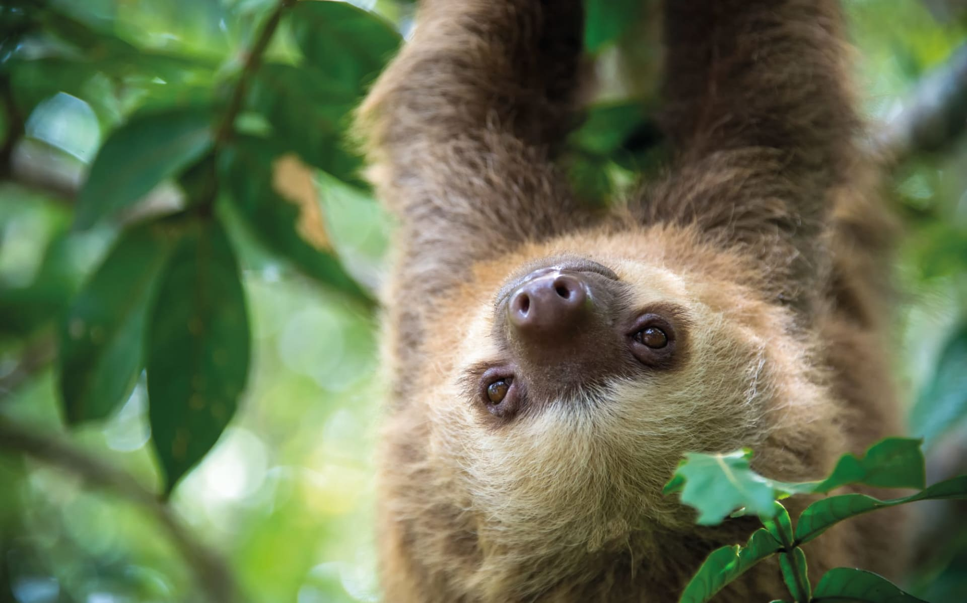 Gruppenreise Costa Rica Pazifiktour ab San José City: Costa Rica - Regenwald - Faultier