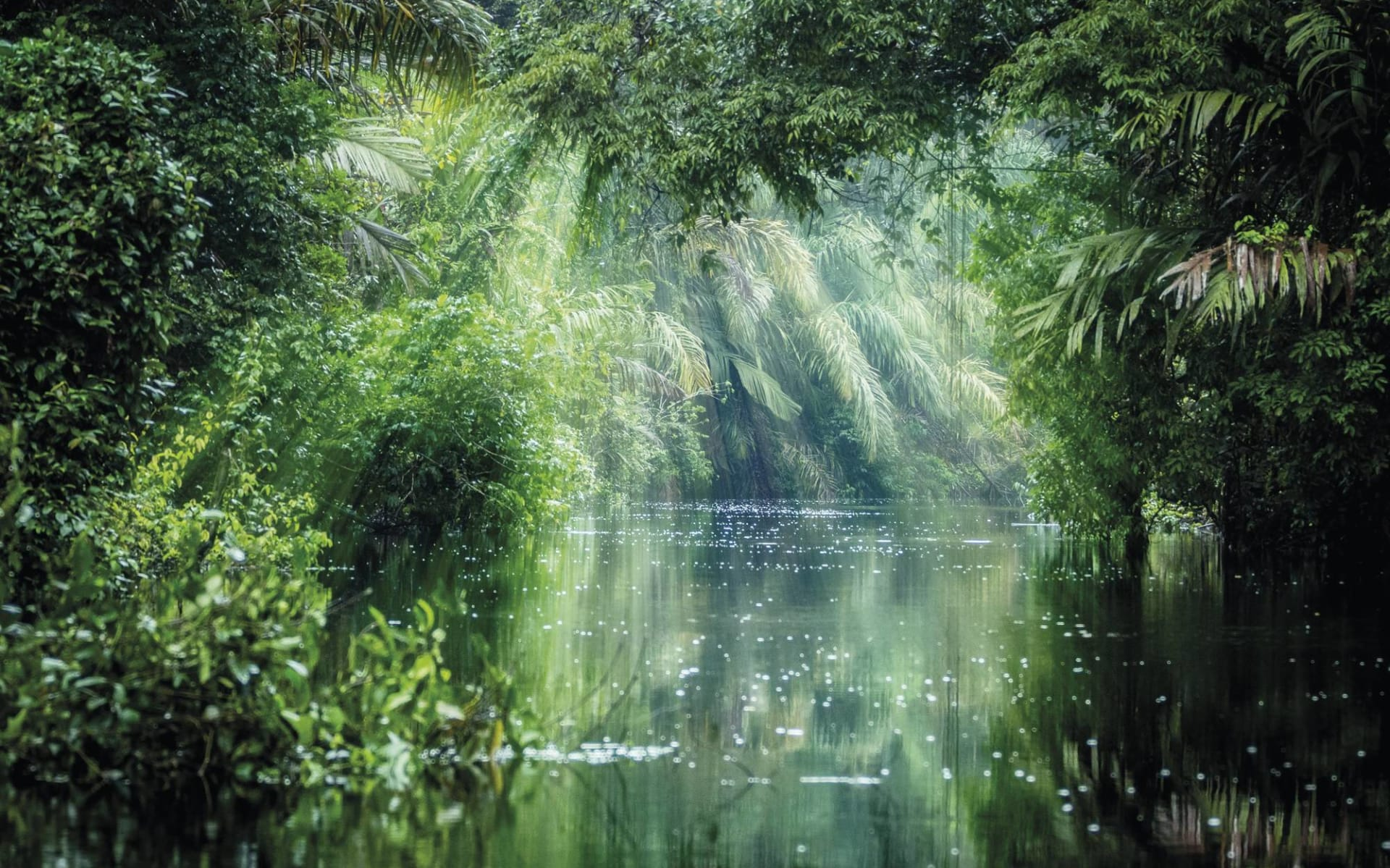 Mietwagenreise Costa Rica Mosaik ab San José City: Costa Rica - Tortuguero Nationalpark - Regenwald