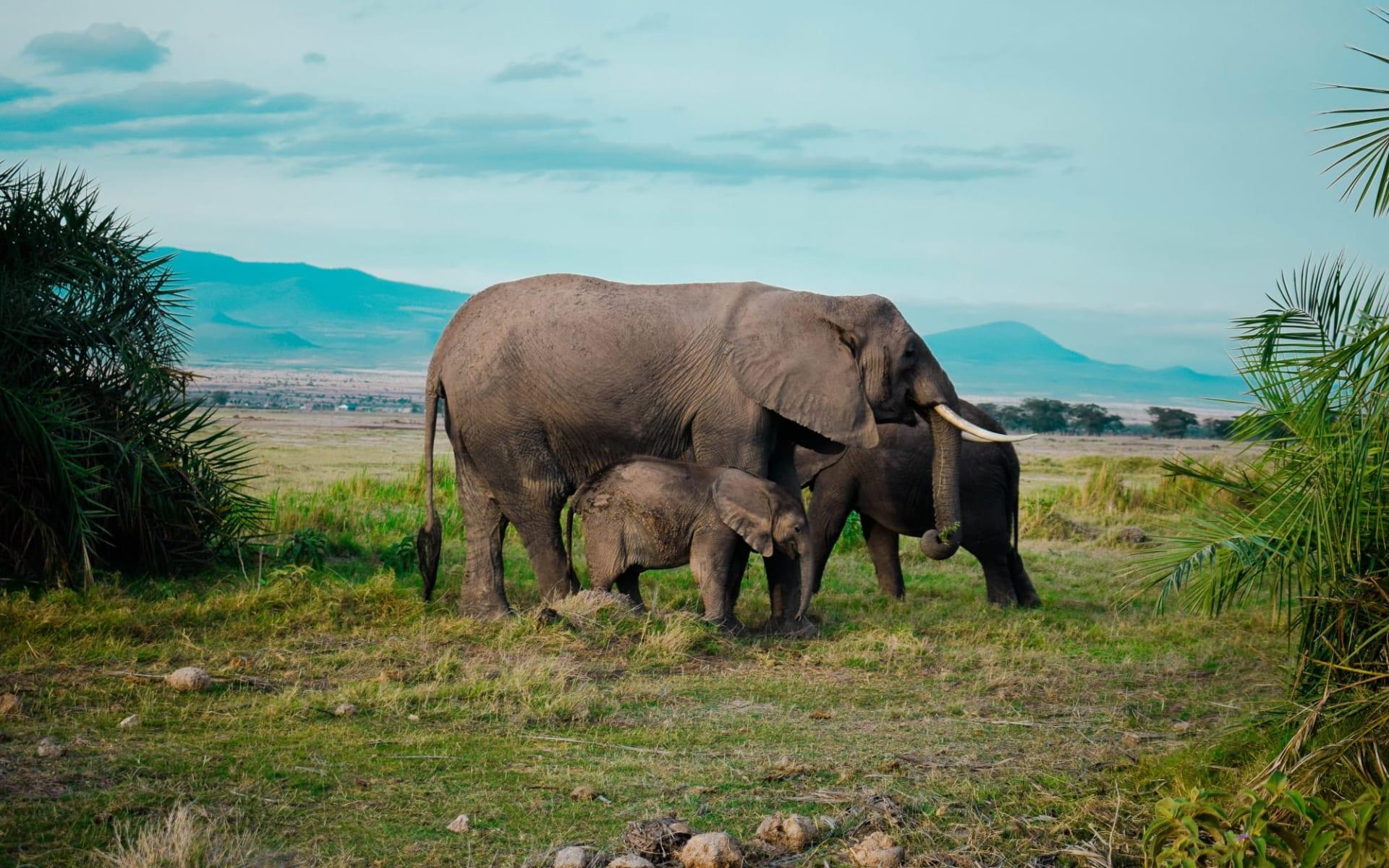 Busch und Kultur Safari ab Arusha: Elephant