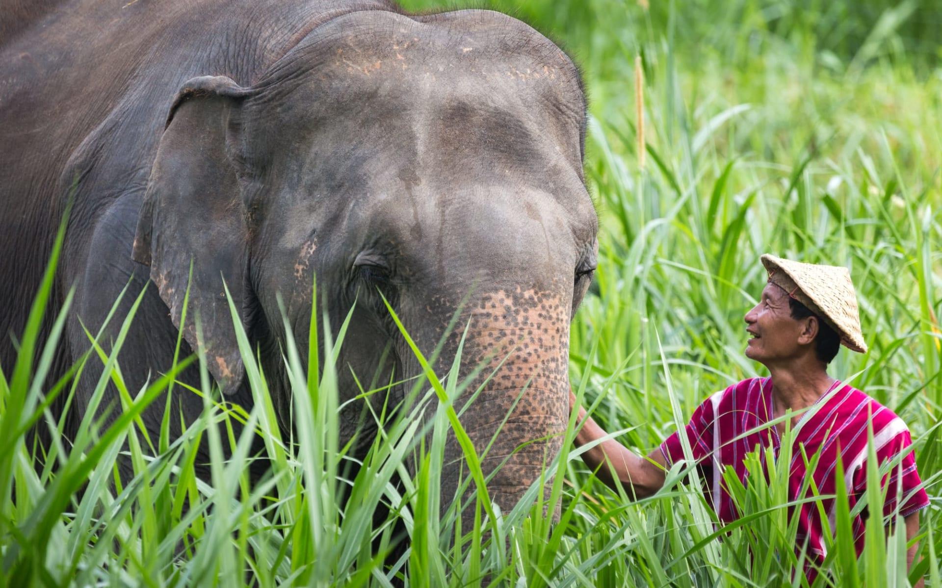Elephant Hills - 2 Tage ab Phuket: Elephant Experience