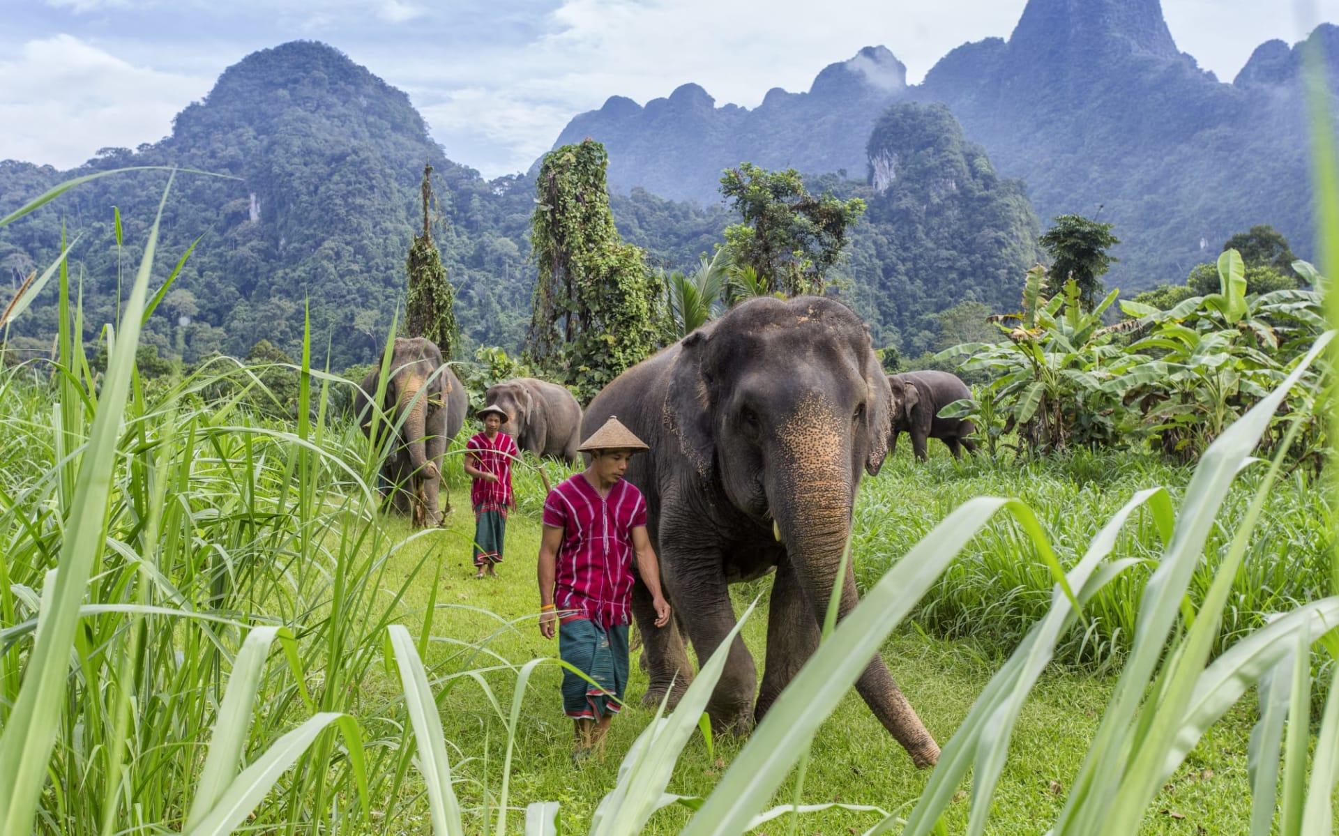 Elephant Hills & Rainforest Camp, Khao Sok Soft Adventure ab Phuket: Elephant Experience