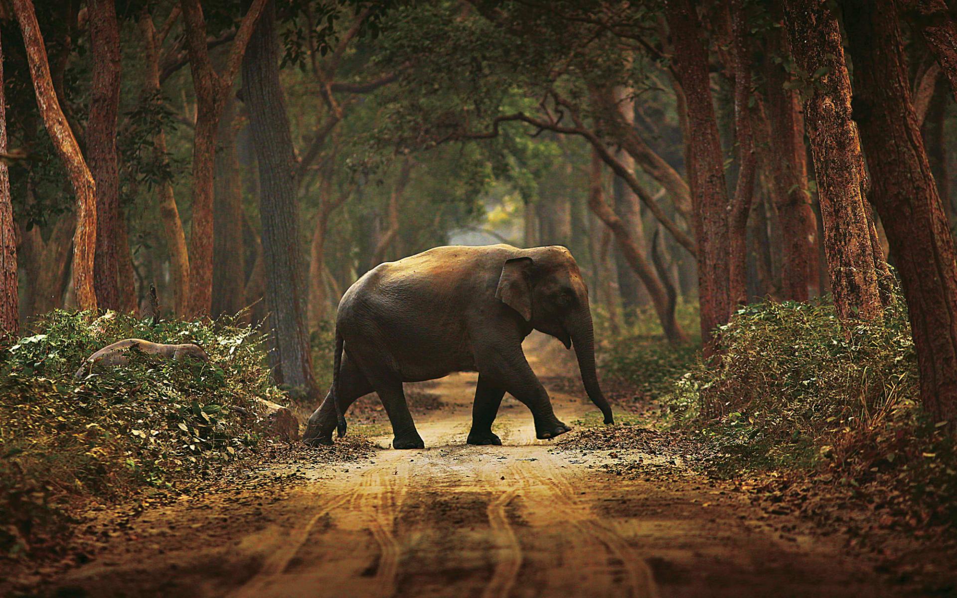 Jaagir Lodge Safari ab Lucknow: Elephant Trail