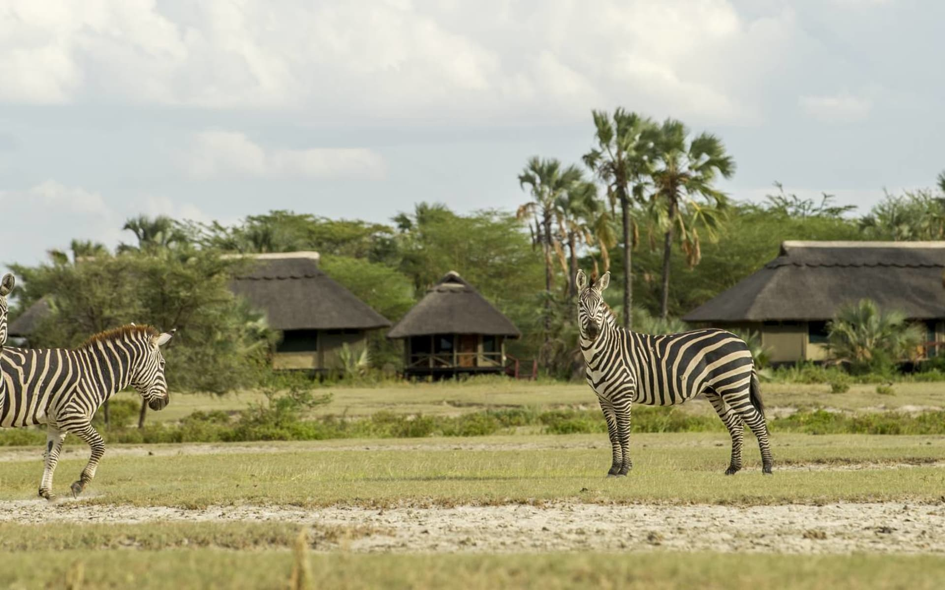 Ngorongoro - Tarangire Safari ab Arusha: exterior: Camp Panorama