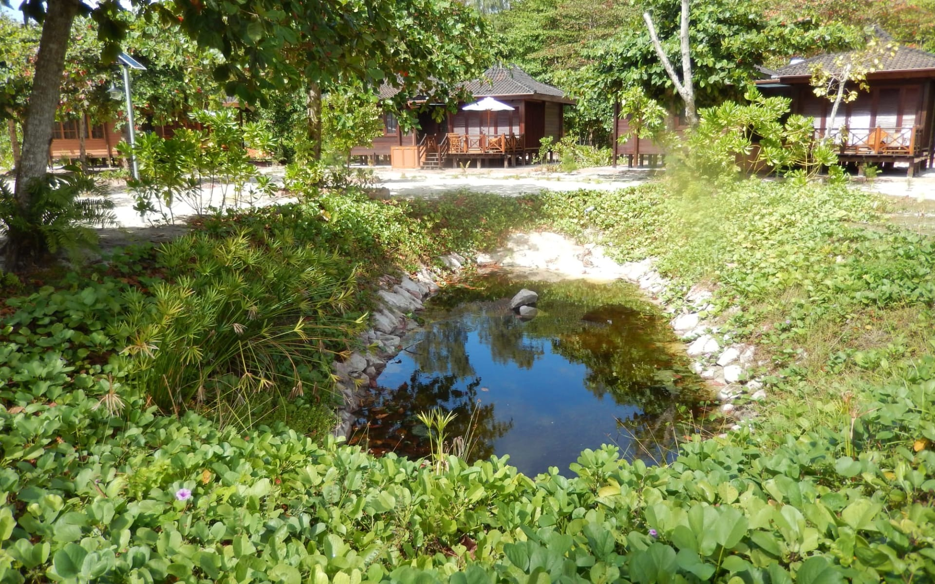 Heliconia Grove in Praslin: Pond