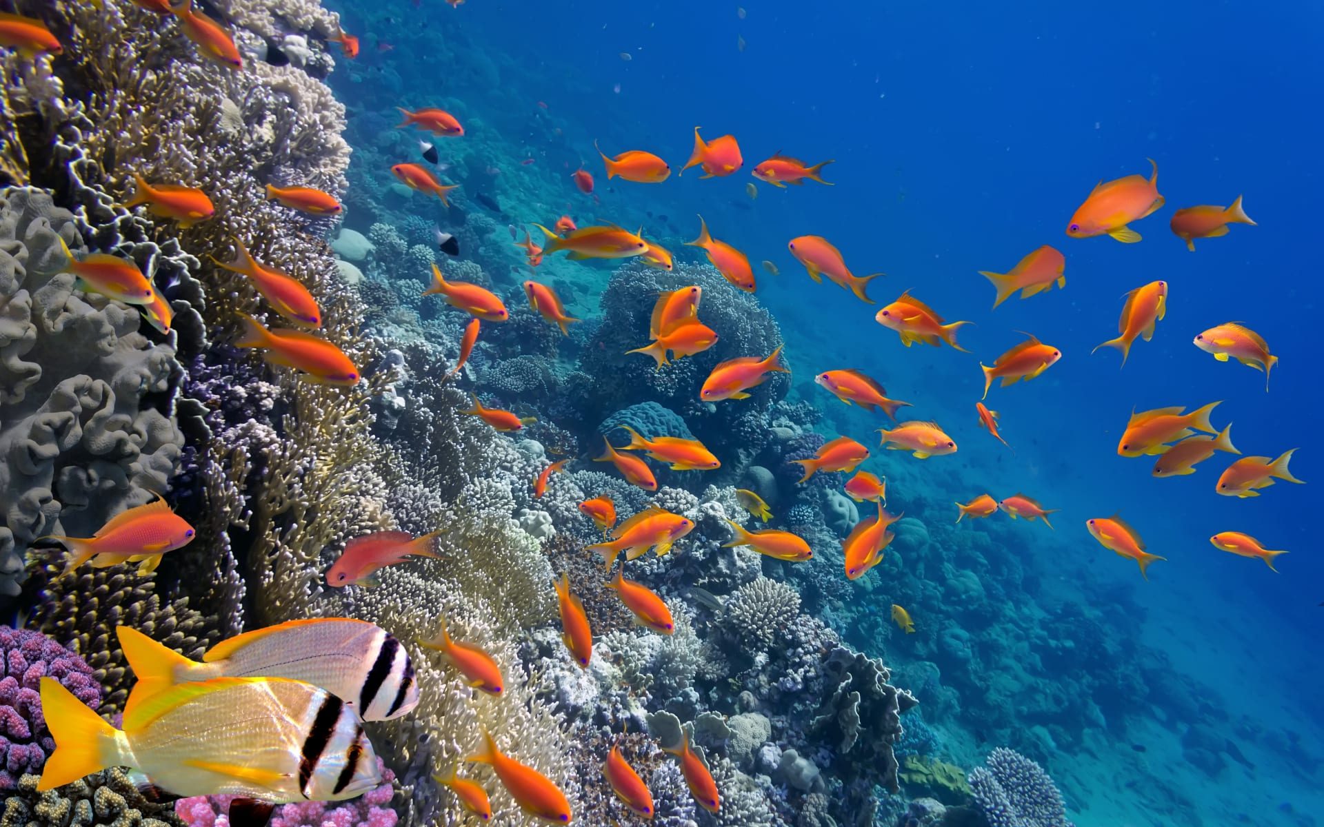 Badeferien im JAZ Lamaya Resort ab Marsa Alam: Fische Marsa Alam
