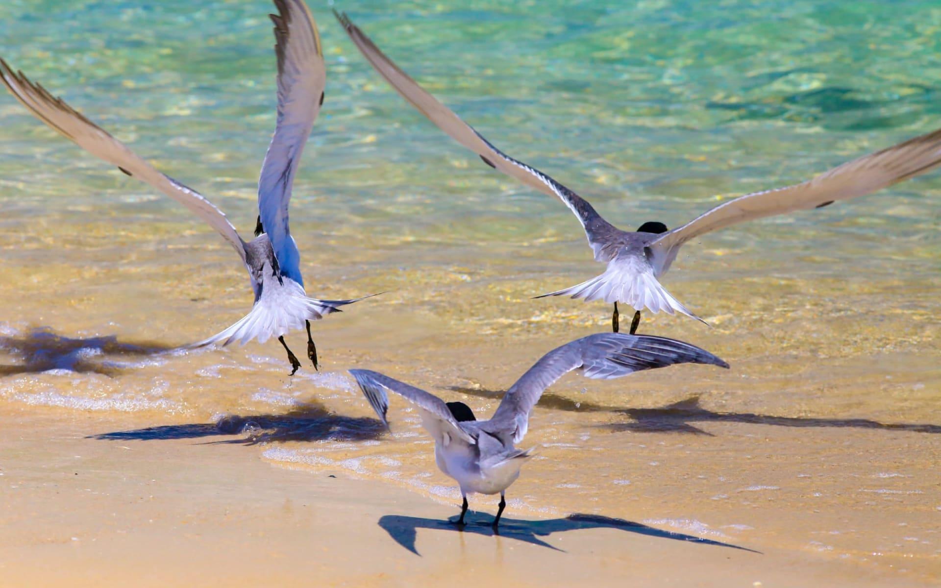 Great Keppel Island Hideaway: Great Keppel Isl Hideaway 1580539402