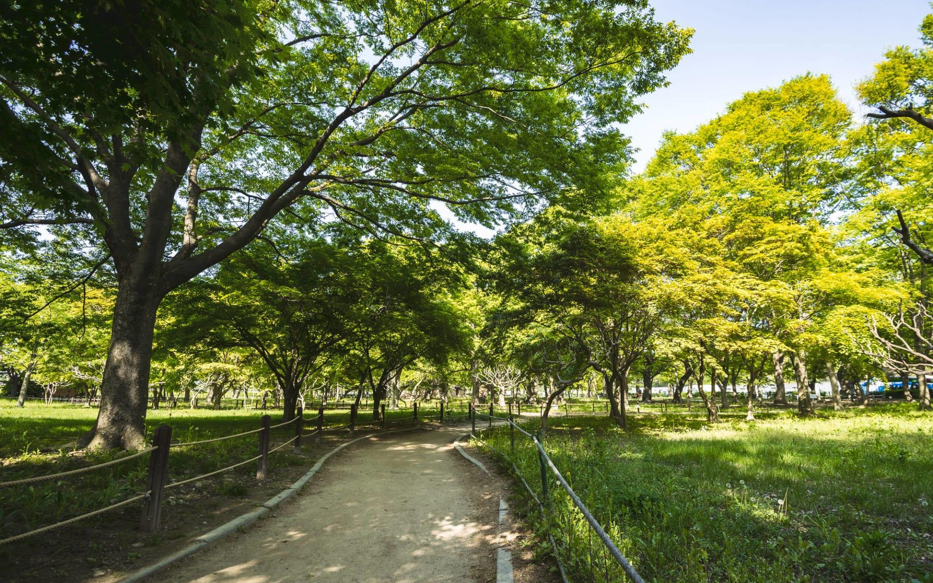 Südkorea aktiv erleben ab Seoul: Gyeongju Gyerim forest
