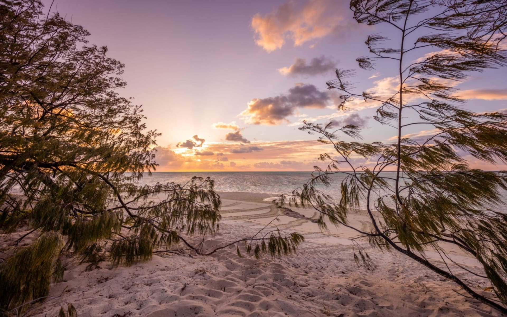 Heron Island Resort: Heron-island_beach
