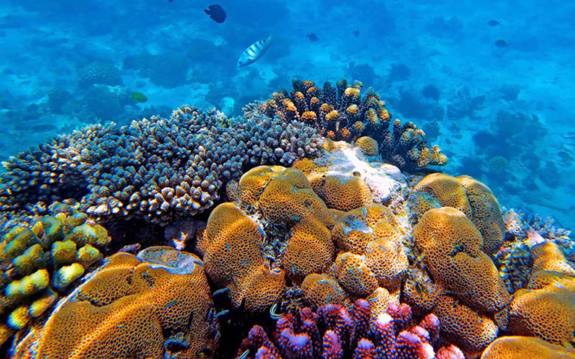 Heron Island Resort: Heron-island_underwater