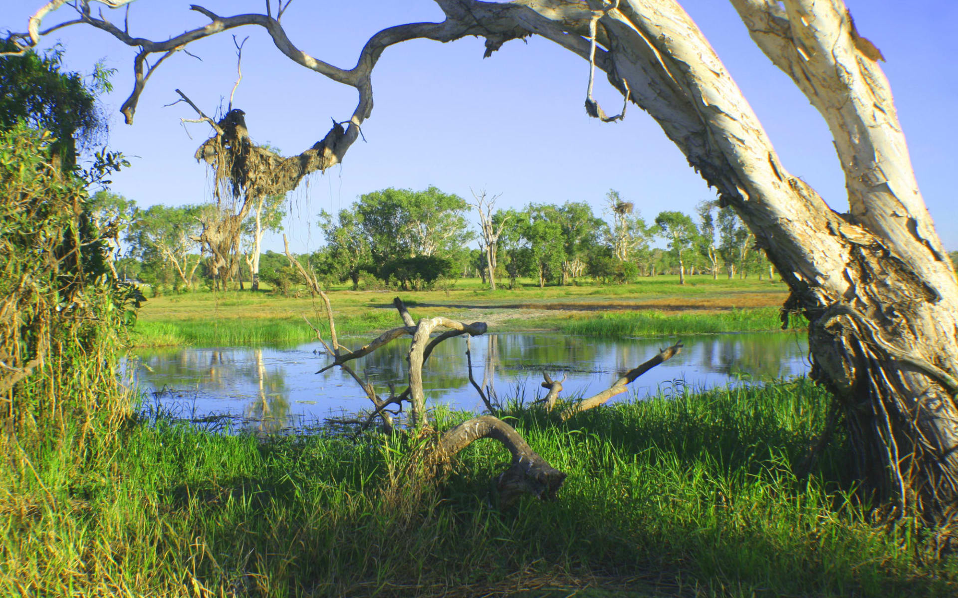 4x4 Hawk Dreaming Safari ab Darwin: Kakadu National Park - Yellow Water - Tree