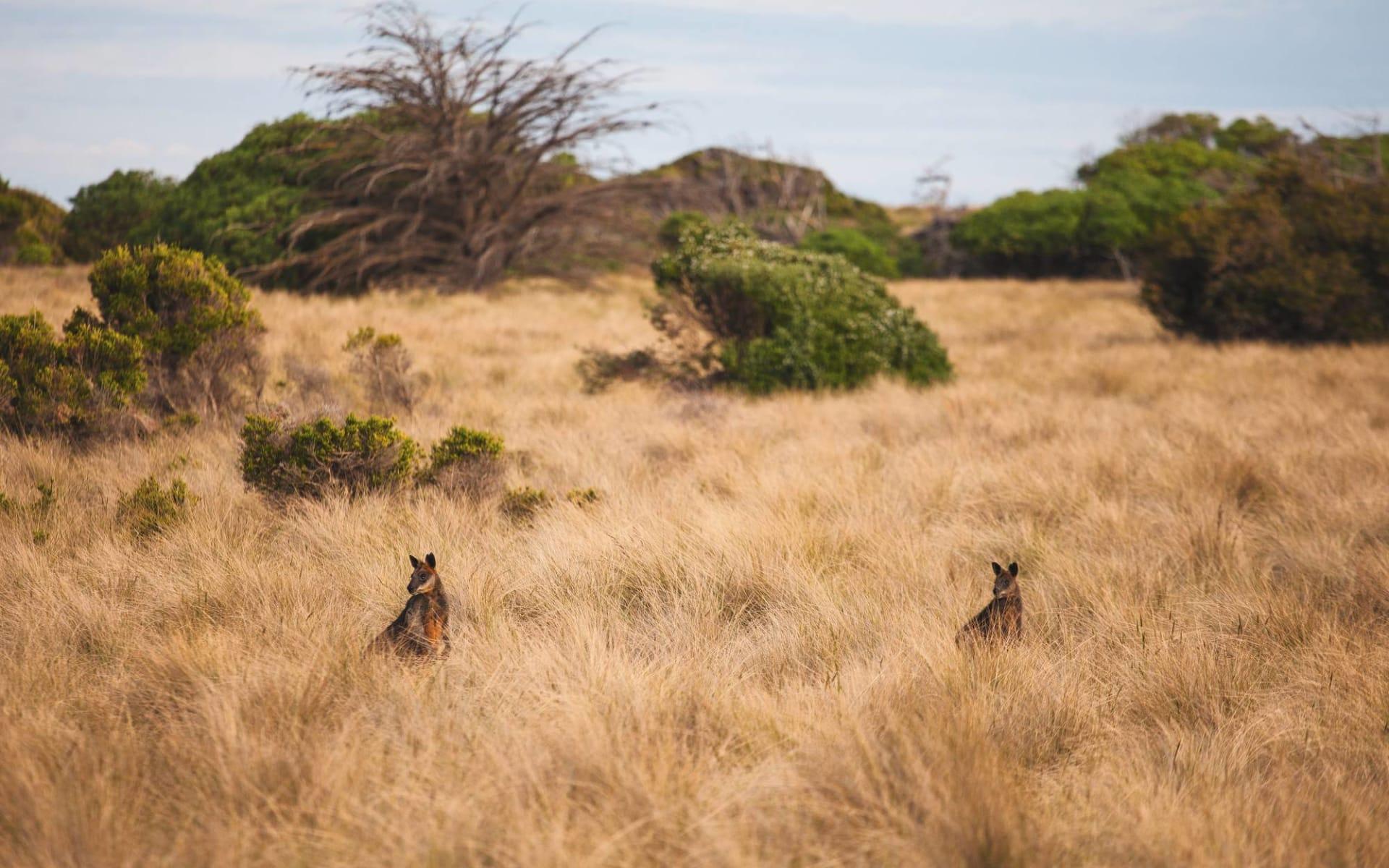 Lifestyle, Wine & Wildlife ab Adelaide: Kangaroo Island