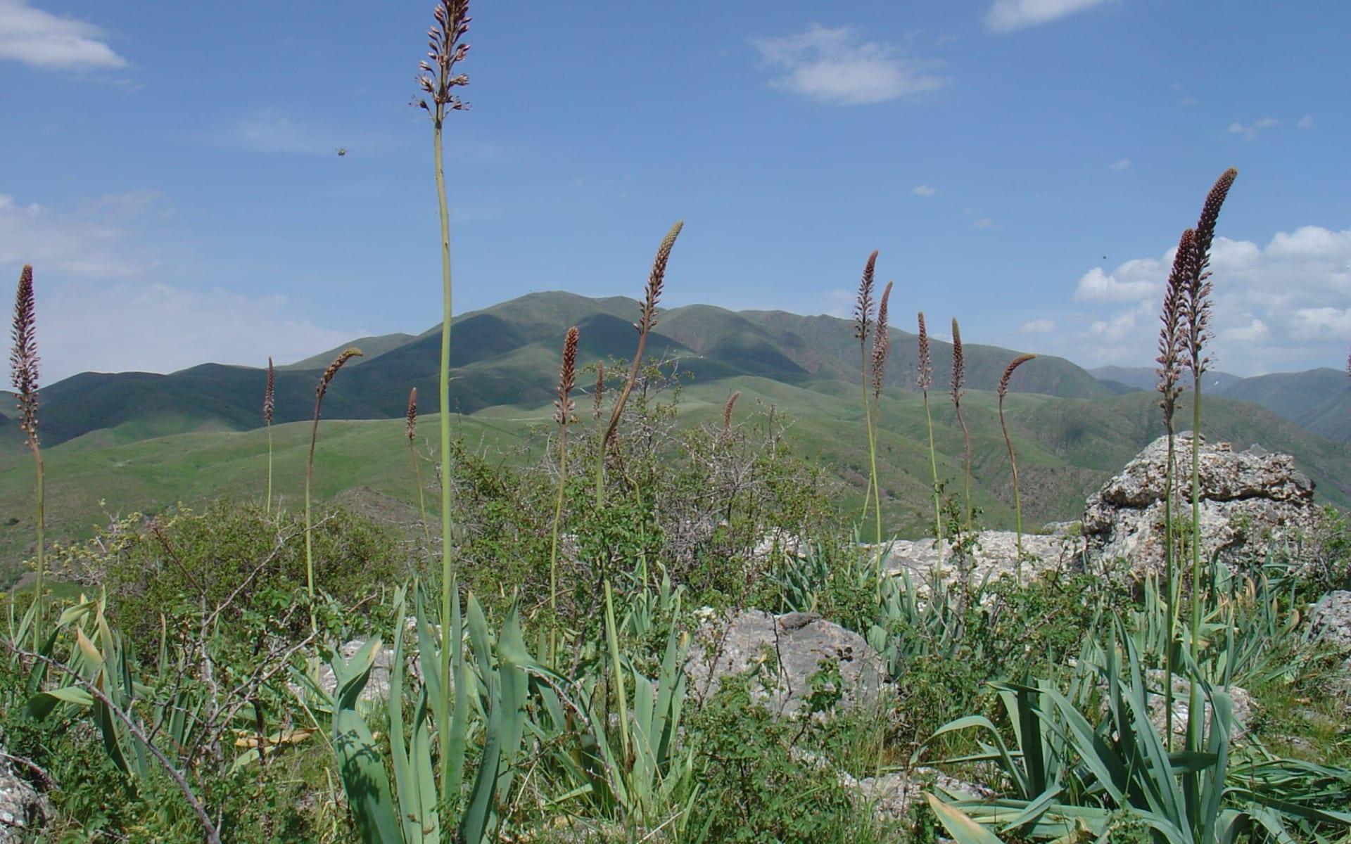 Kasachstan und Kirgistan kompakt ab Almaty: Kasachstan - Zabagly