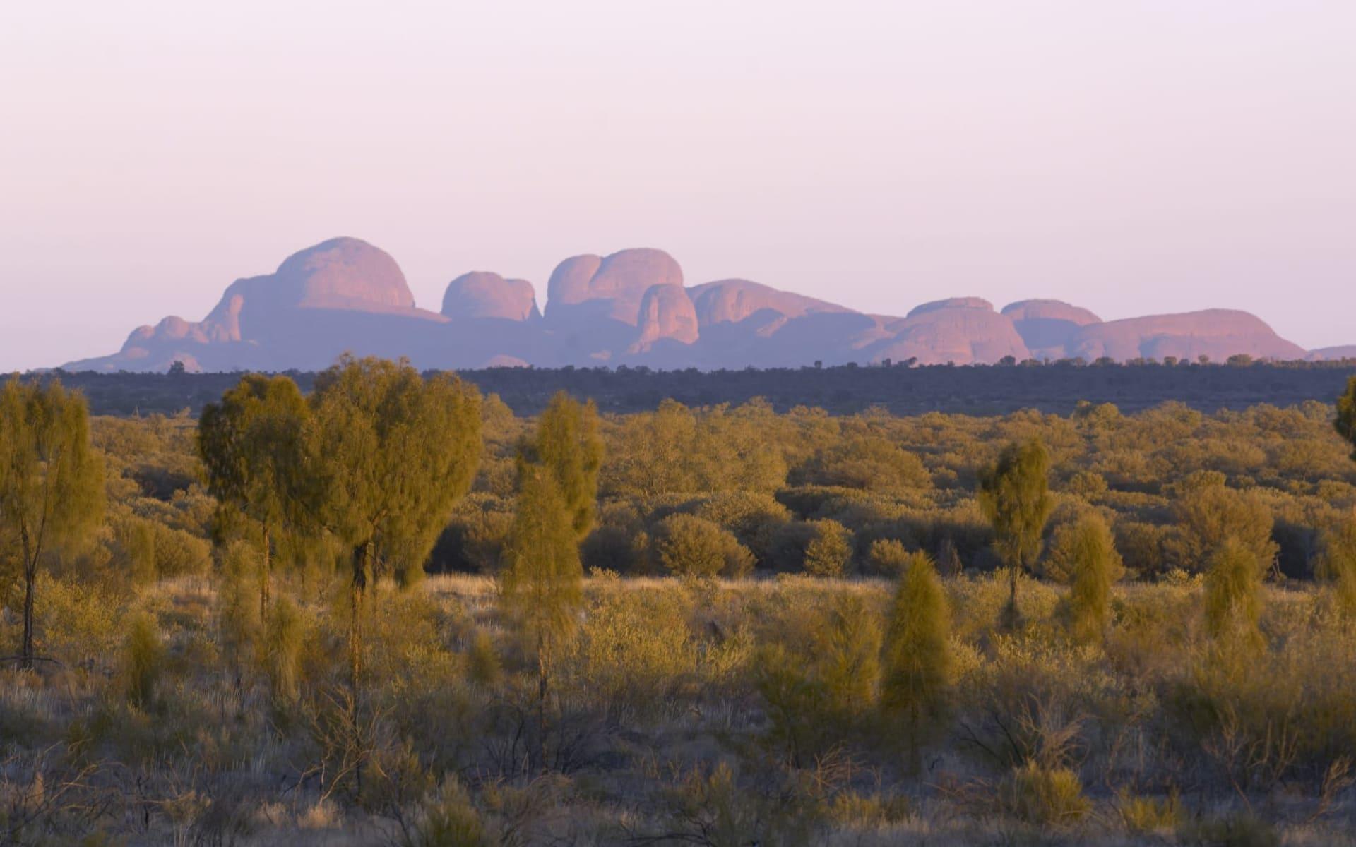 Kata Tjuta, Uluru & Kings Canyon (AAT Kings) ab Alice Springs: Kata Tjuta - Blick mit Büschen