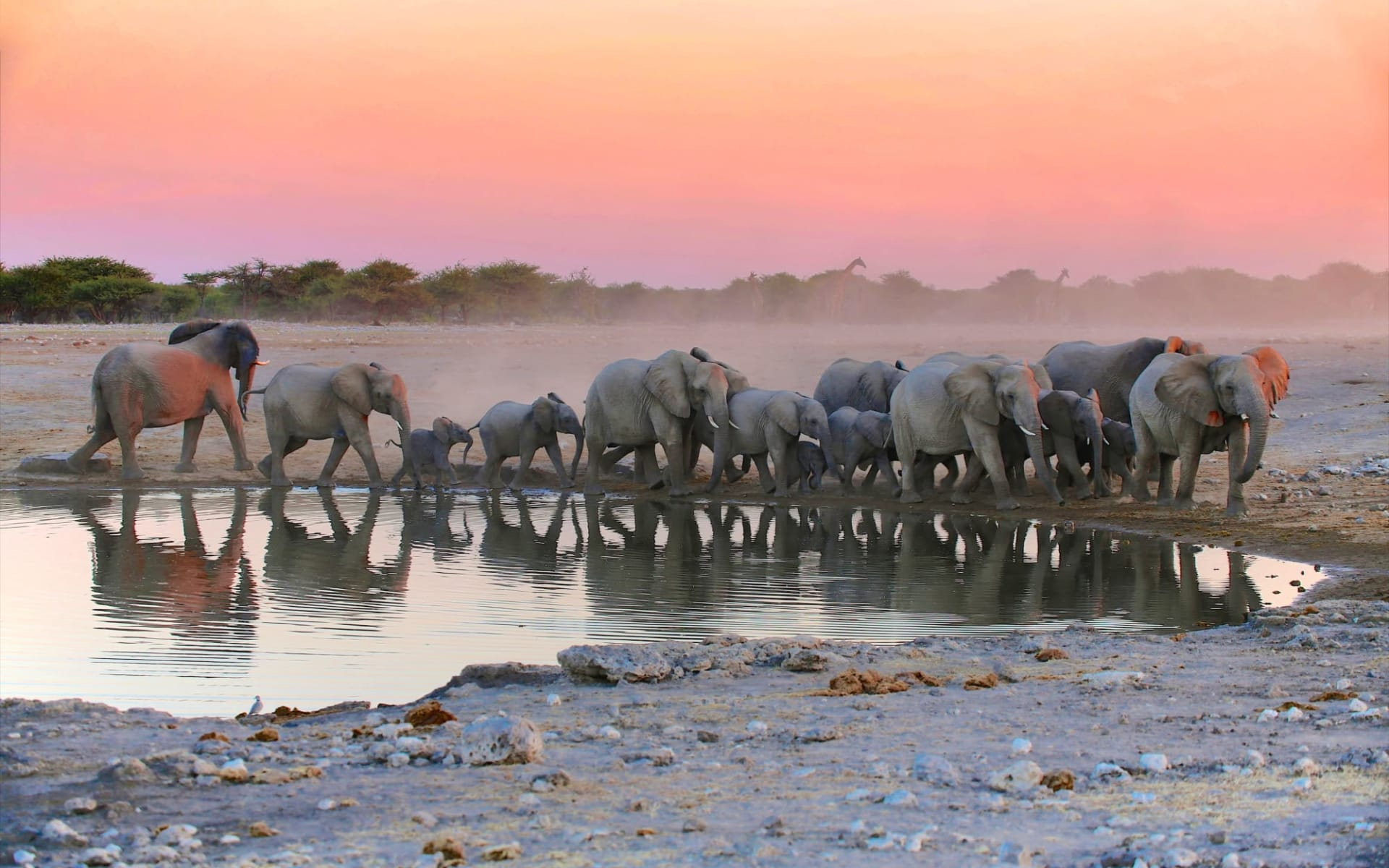 Mushara Lodge & Villas in Etosha Nationalpark:  Namibia Etosha Nationalpark, Elefantenherde