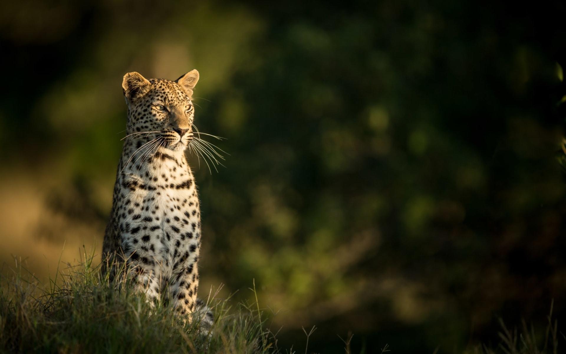 Villa Mushara in Etosha Nationalpark:  Namibia Etosha Nationalpark, Leopard