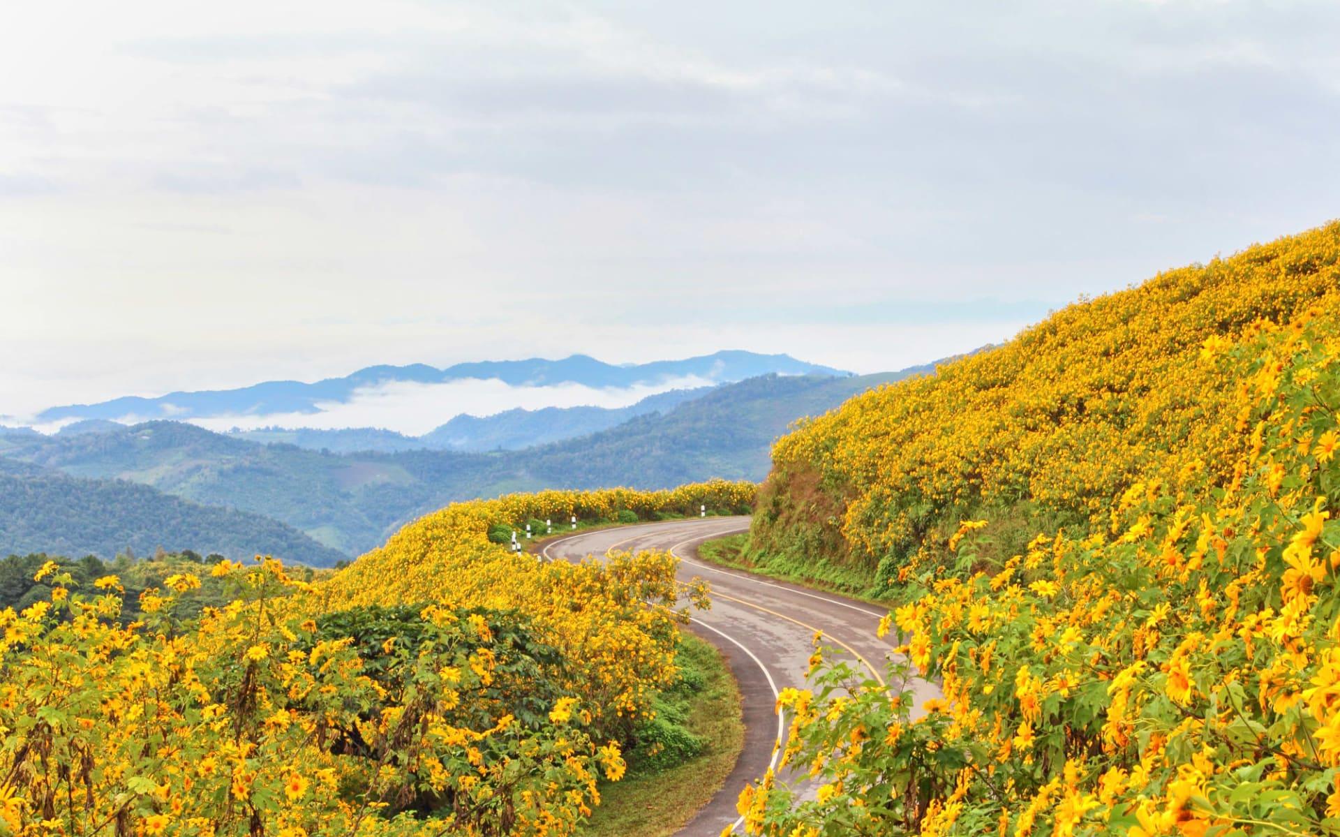 Mietwagenrundreise Mae Hong Son ab Chiang Mai: Mae Hong Son: road through flower field