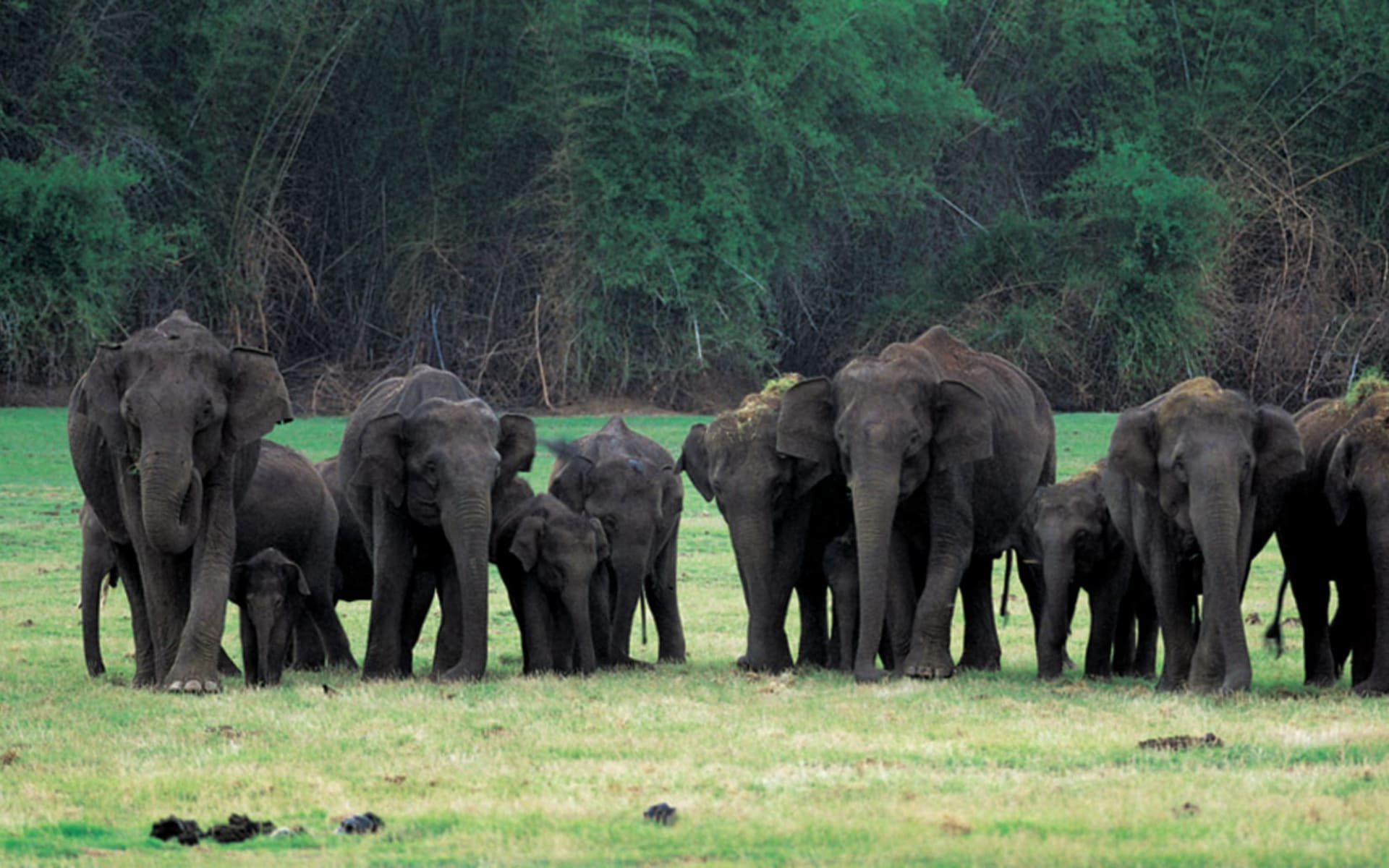 Nagarhole Nationalpark ab Bengaluru: Nagarhole National Park: Elephants