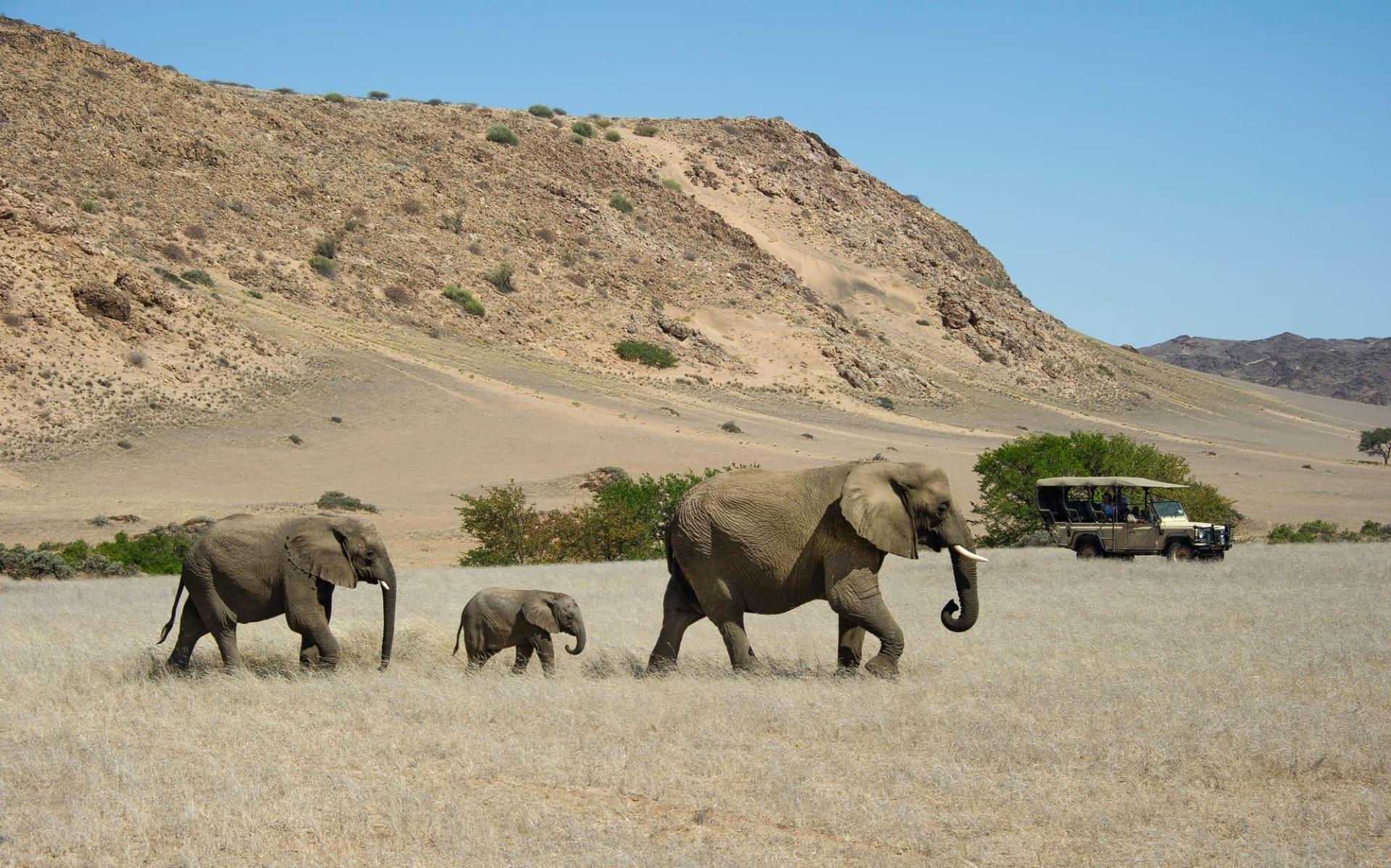Namibia Deluxe ab Windhoek Stadt: Namibia - Elephant