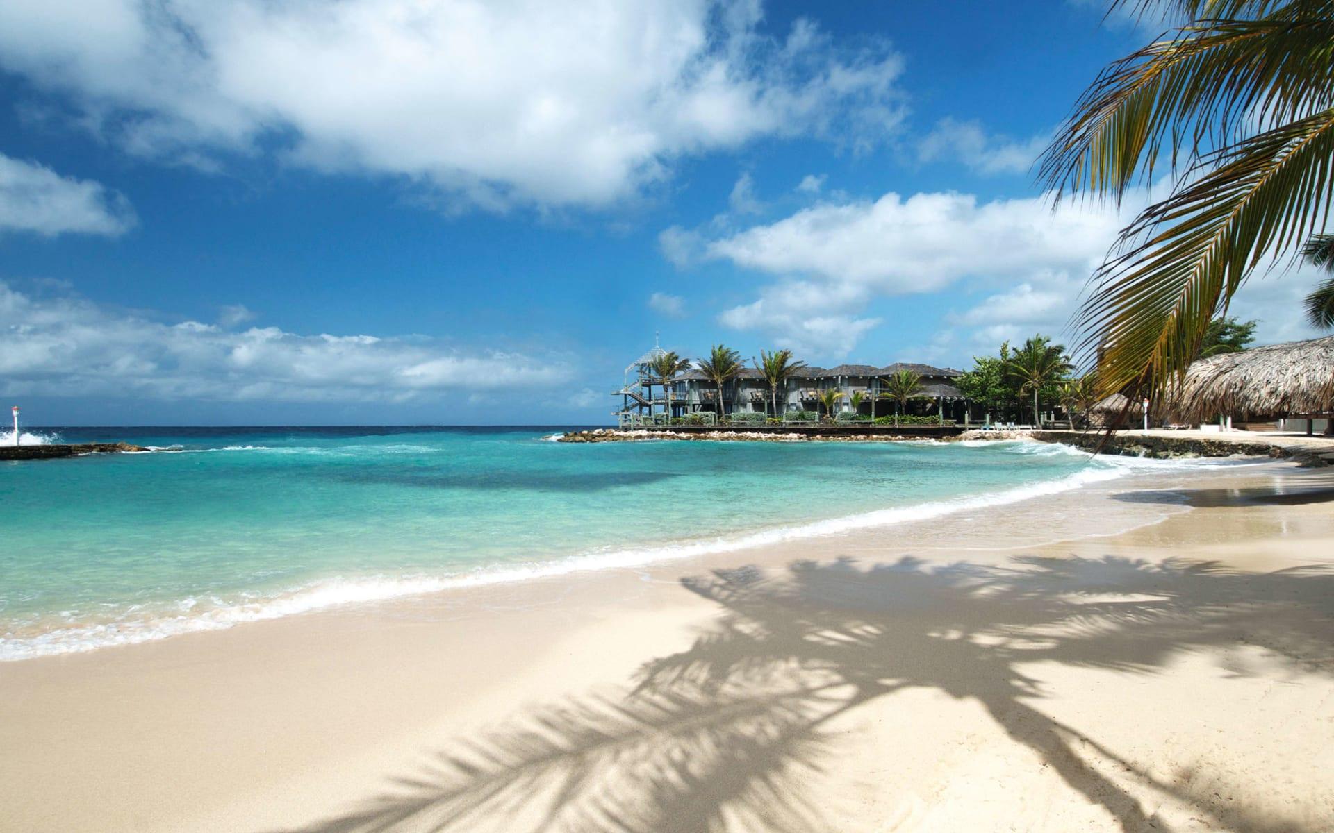 Avila Beach Hotel in Curaçao: natur avila hotel strand meer palme