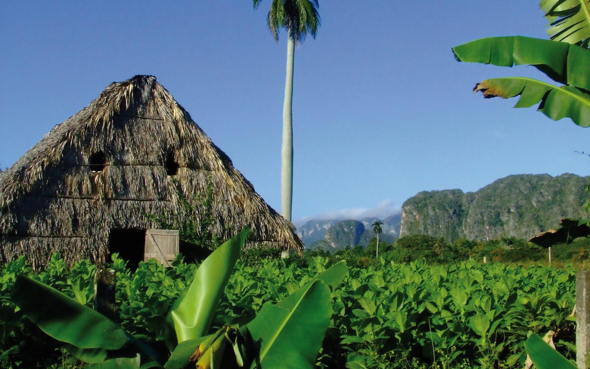 Grosses Kuba ab Havanna: natur deutsch geführte gruppenreisen