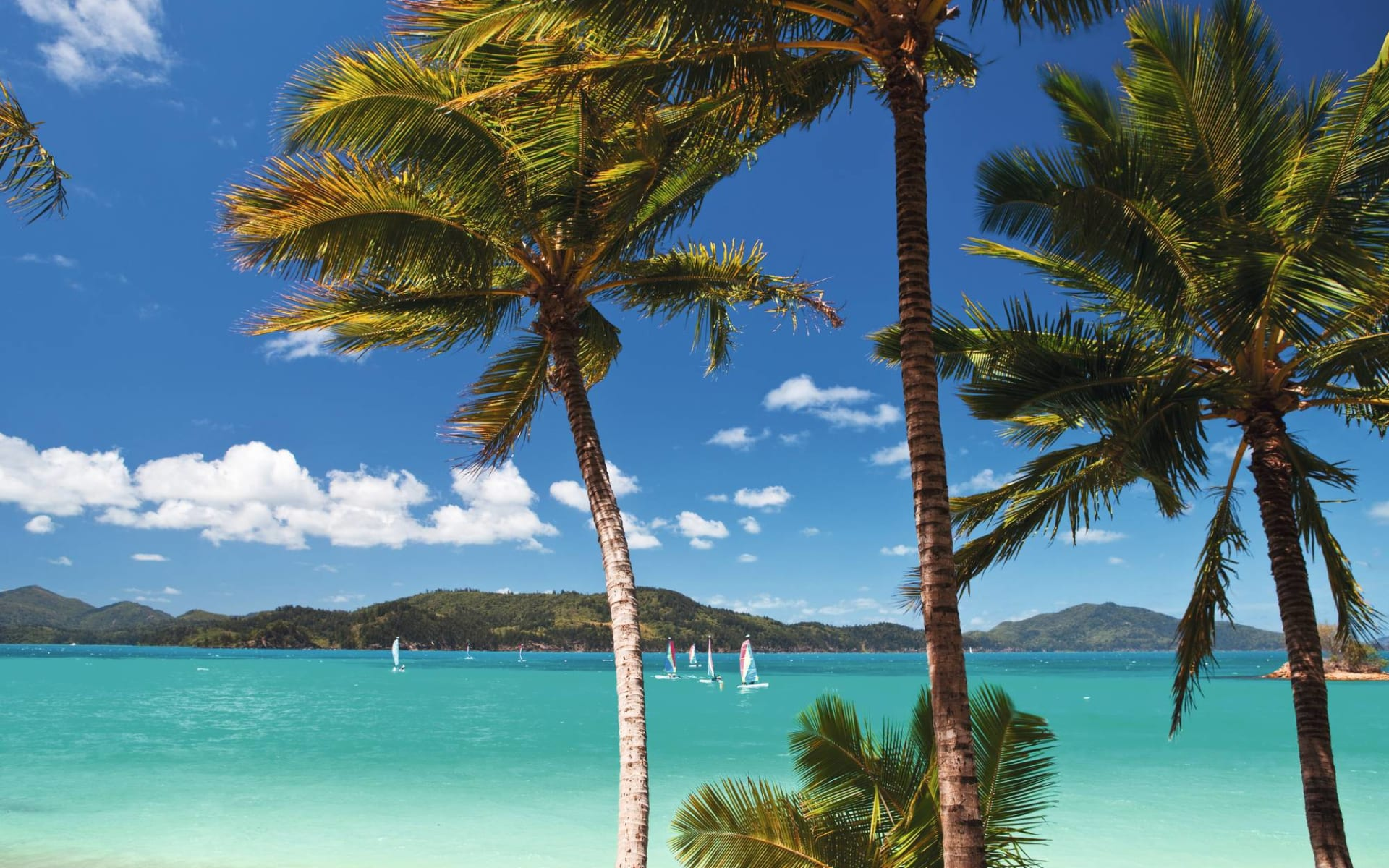 Reef View Hotel in Hamilton Island: Natur Hamilton Island Queensland Australien  c shutterstock_501597214 2017