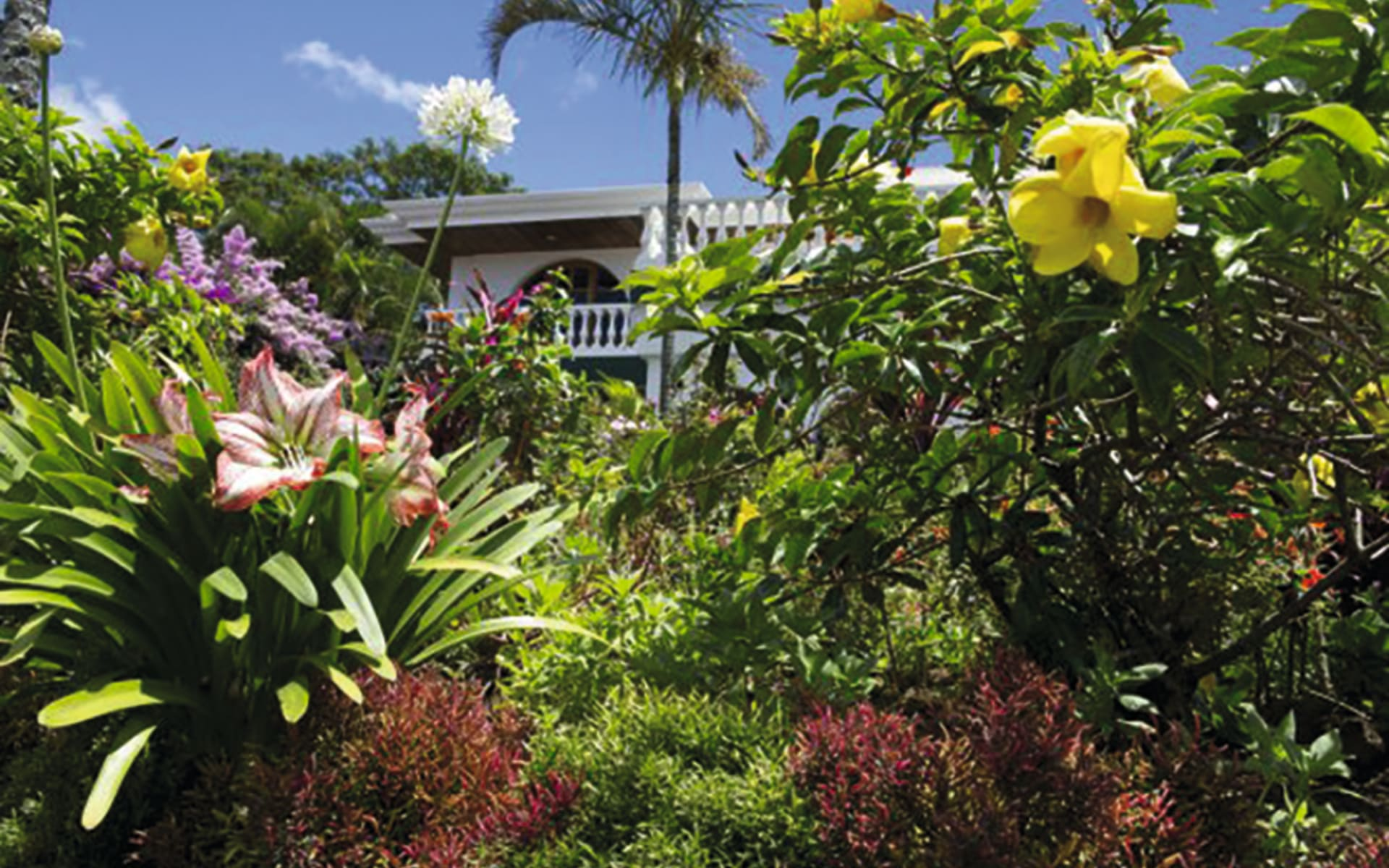 Buena Vista in Alajuela: natur hotel buena vista pflanzen