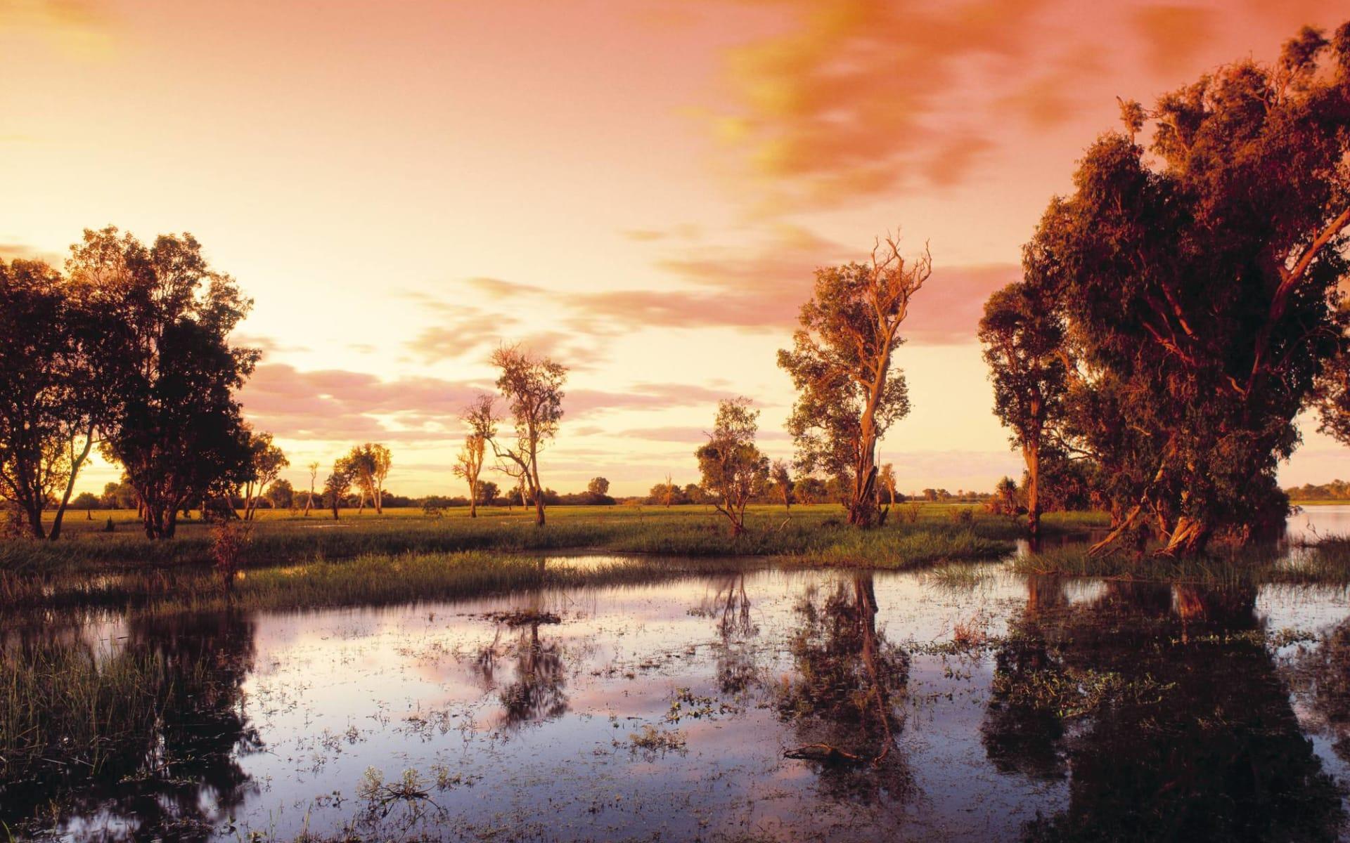Kakadu Lodge Cooinda: Natur Kakadu Nationalpark Northern Territory Australien  Yellow Water Lagoon  c