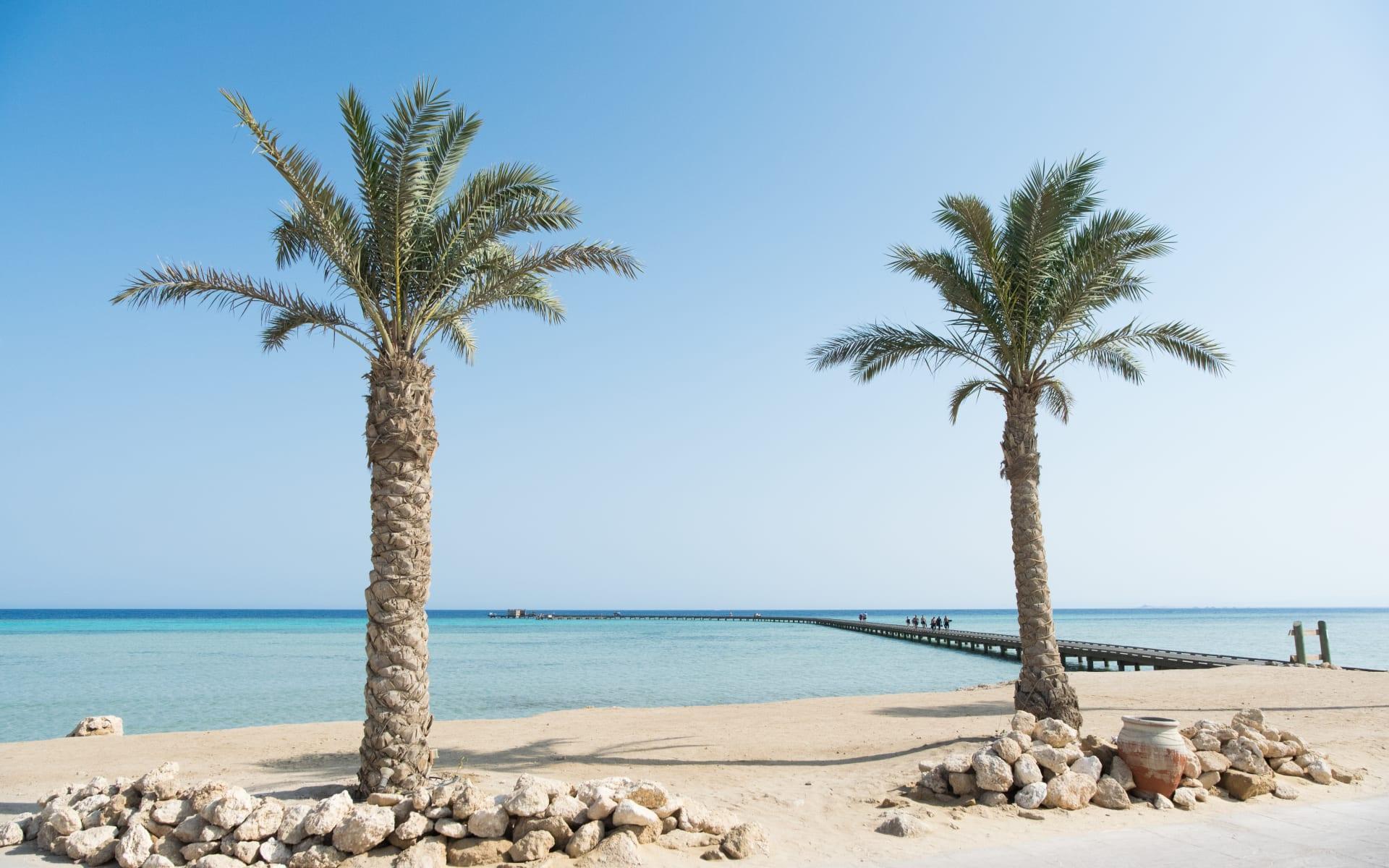 Badeferien im Sheraton Soma Bay ab Hurghada: Palmen Soma Bay, Hurghada