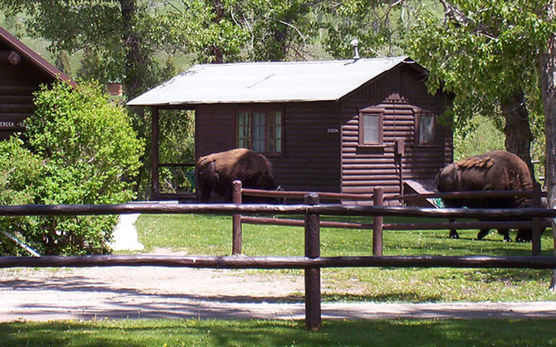 Parade Rest Guest Ranch in West Yellowstone: Parade Guest Ranch - Buffalos