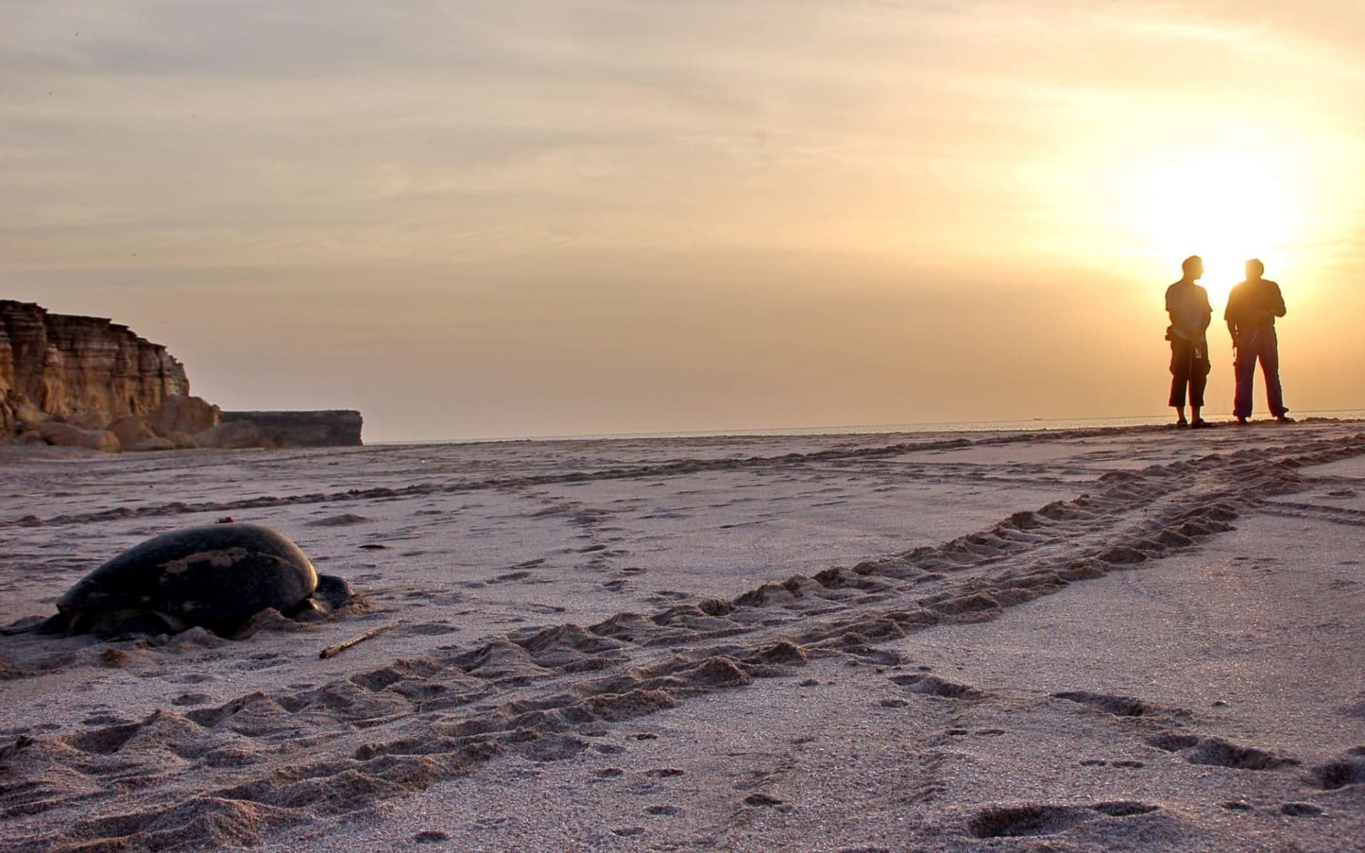Omans Höhepunkte ab Muscat: Ras Al Jinz