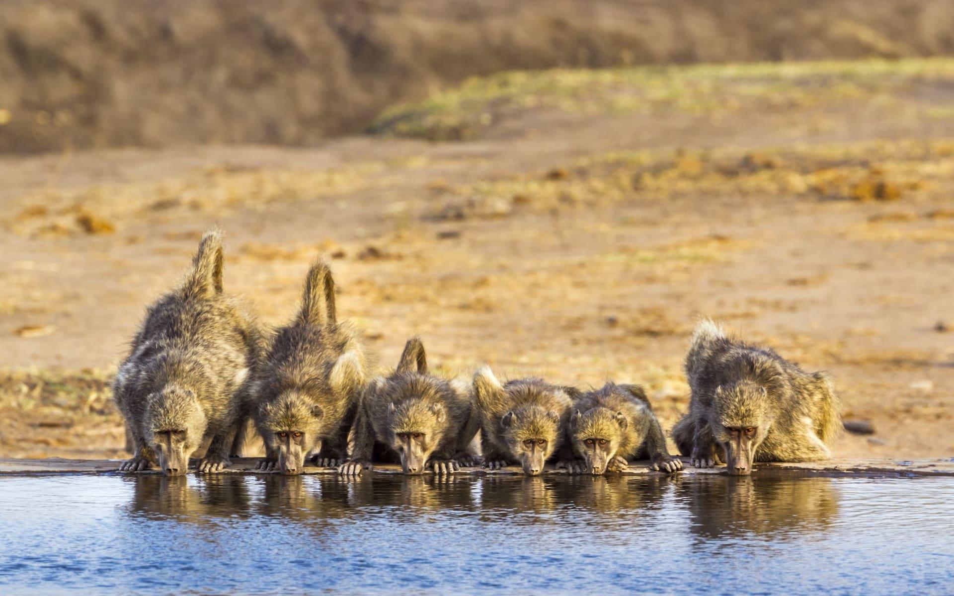 Abenteuer Safari ab Johannesburg: Krüger Nationalpark