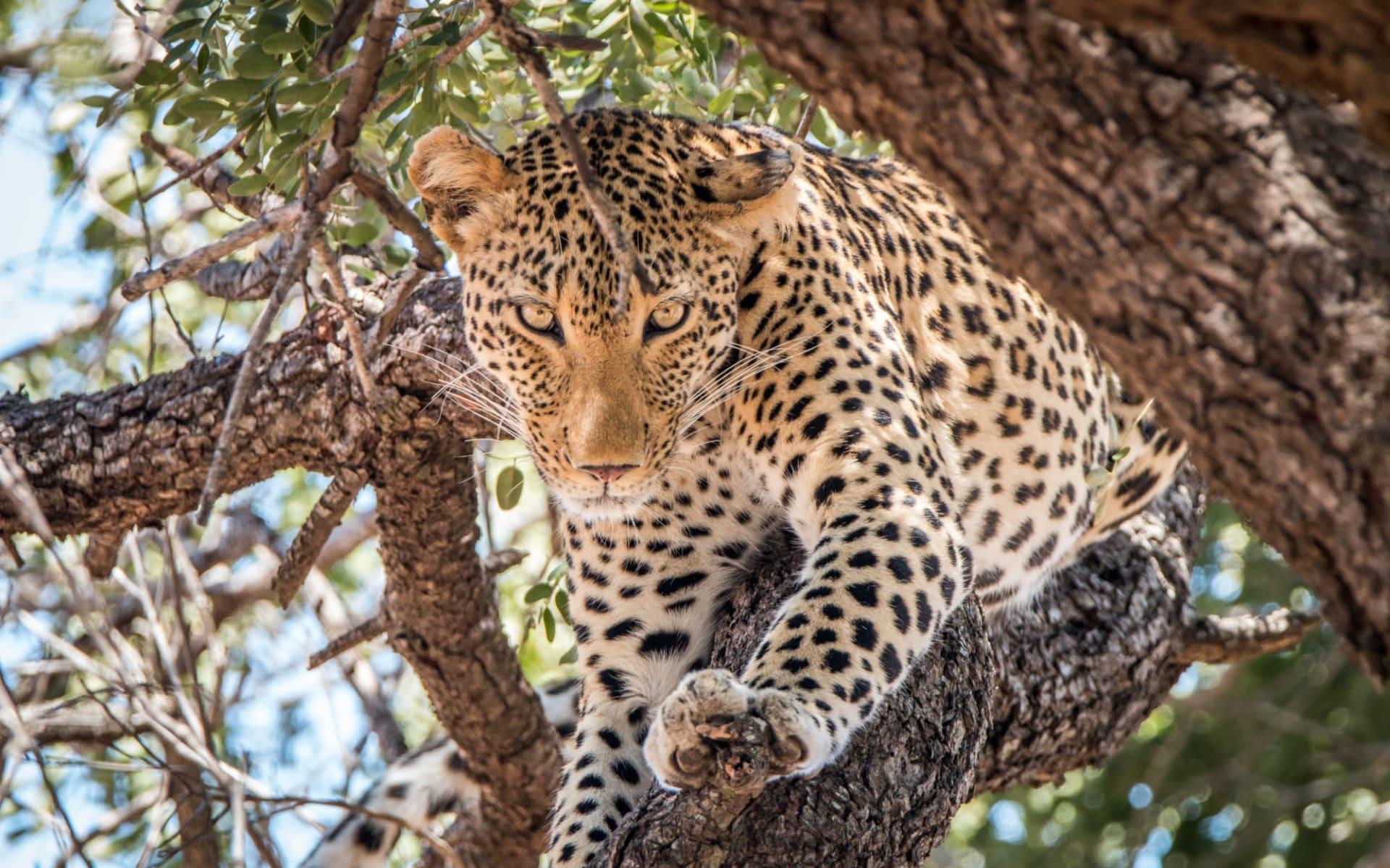 Kultur & Natur ab Durban: Krüger Nationalpark
