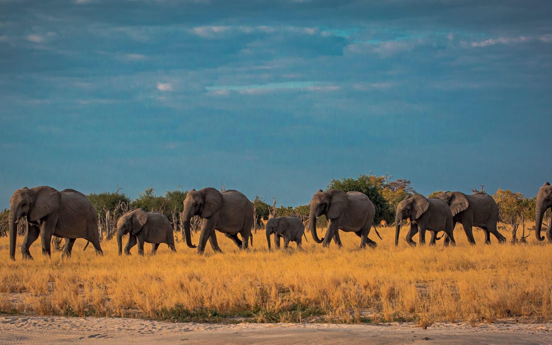 Letaba Rest Camp in Krüger Nationalpark: tier Elefanten - Südafrikanische Impressionen c