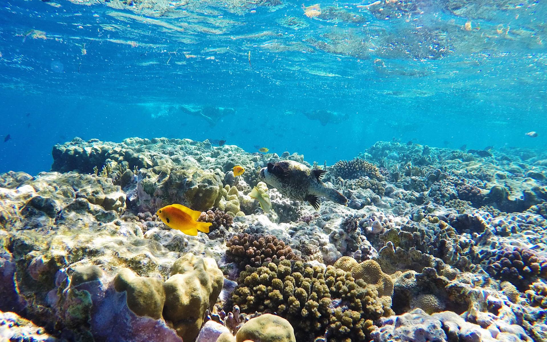 Badeferien im Mövenpick Resort El Quseir ab Hurghada: Unterwasserwelt El Quseir