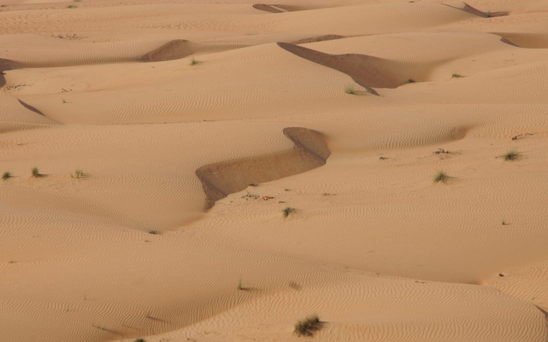 Abenteuer mit dem Wüstenschiff ab Muscat: Wahiba Sands in Oman